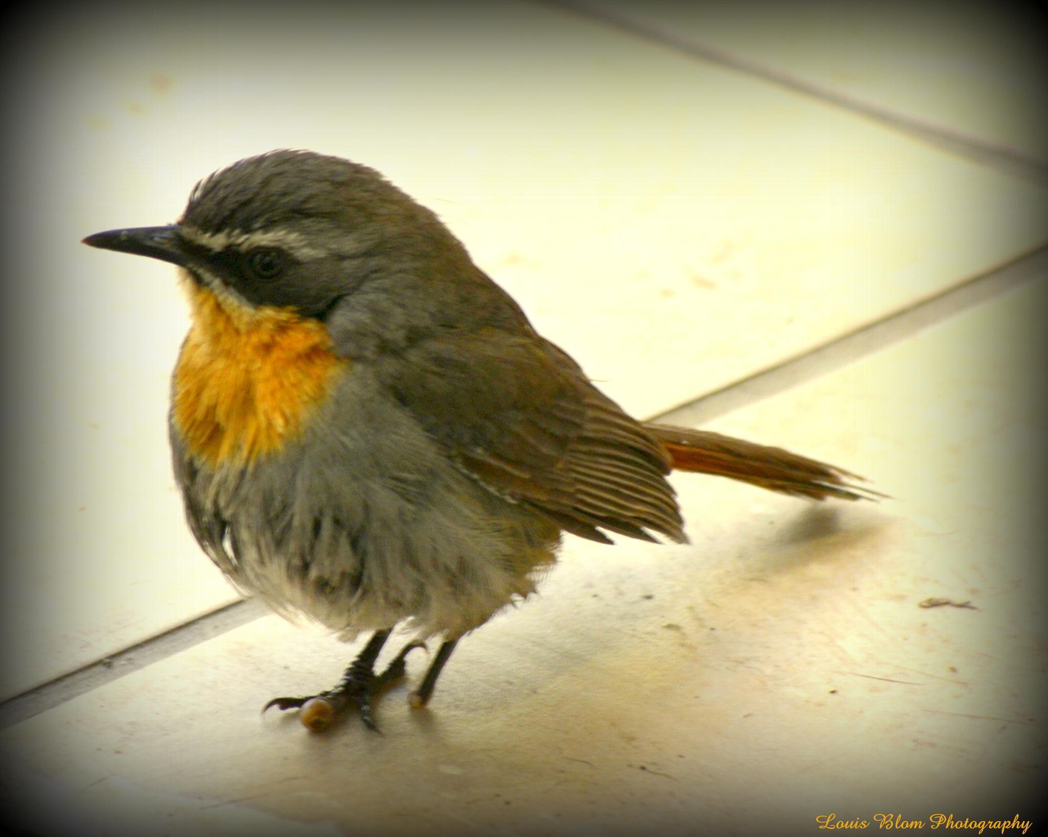Photo in Random #all #birds