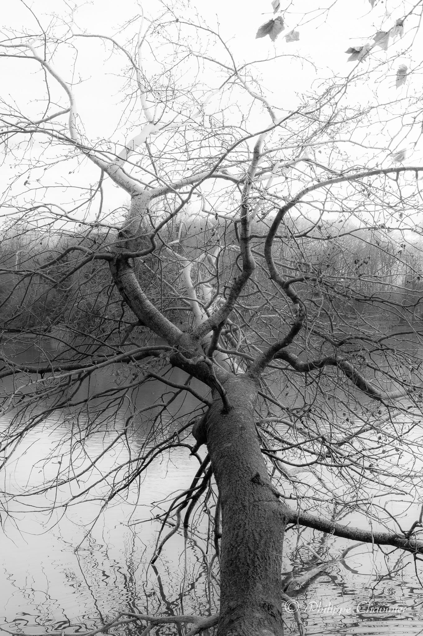 Neural network by Philippe Chavinier