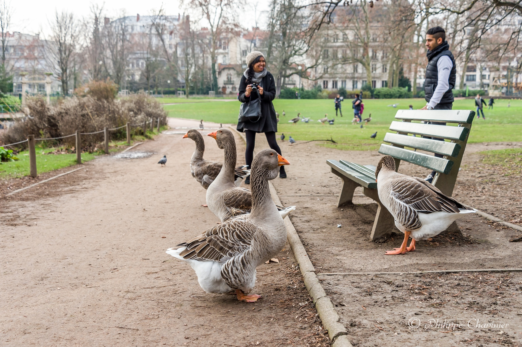 Geese alignment by Philippe Chavinier