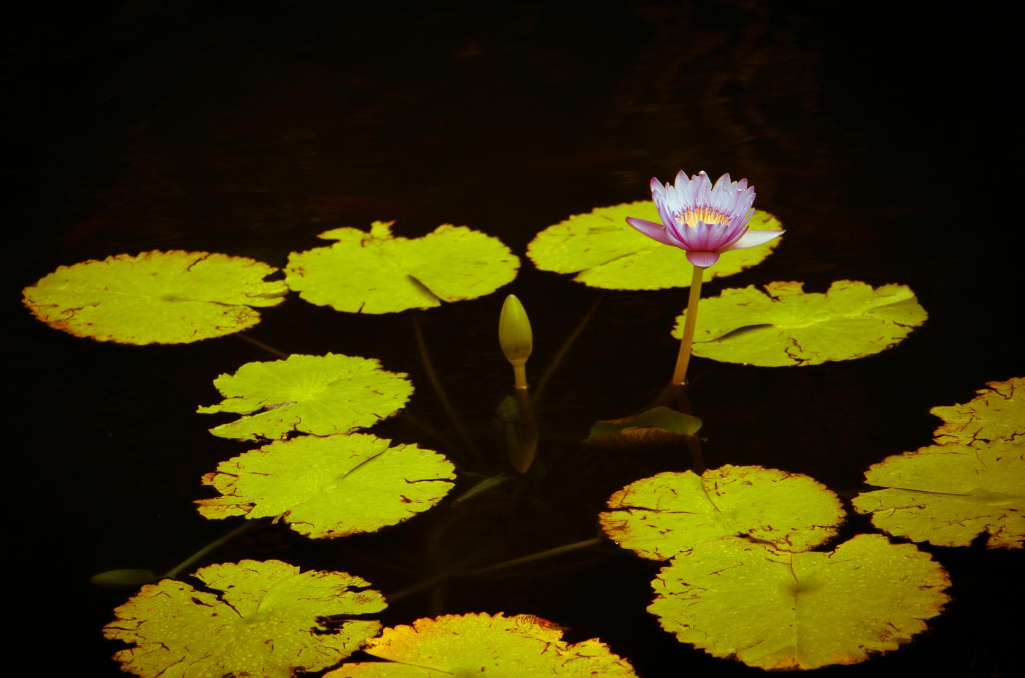 Blossom by Annalyn Diaz