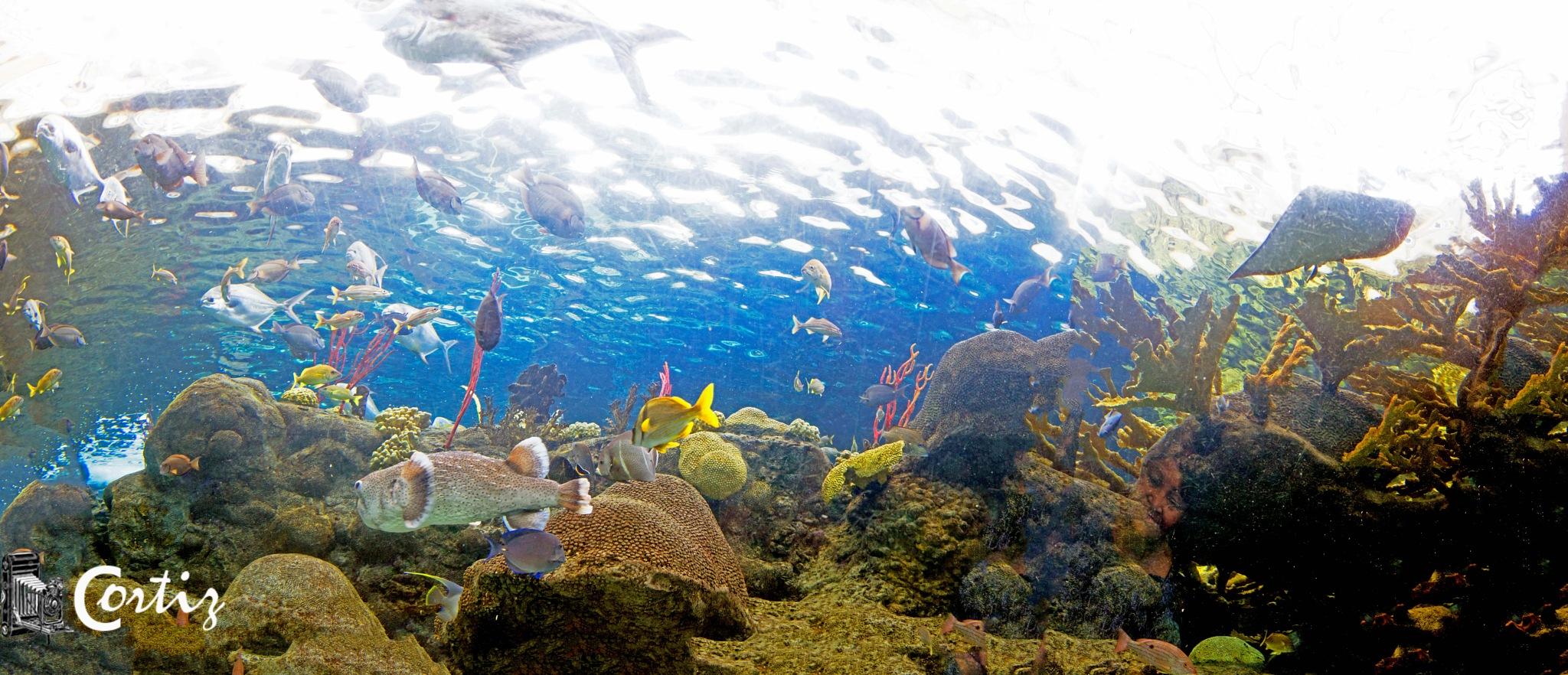 Florida Aquarium  by titco62