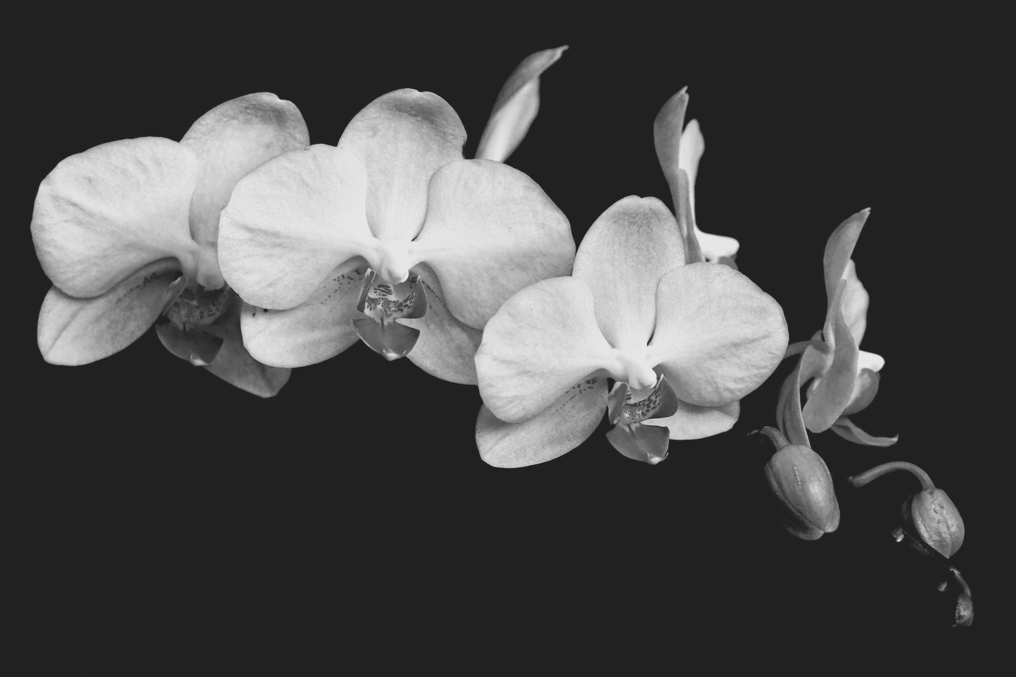 Blooms in black and white by leecj0129