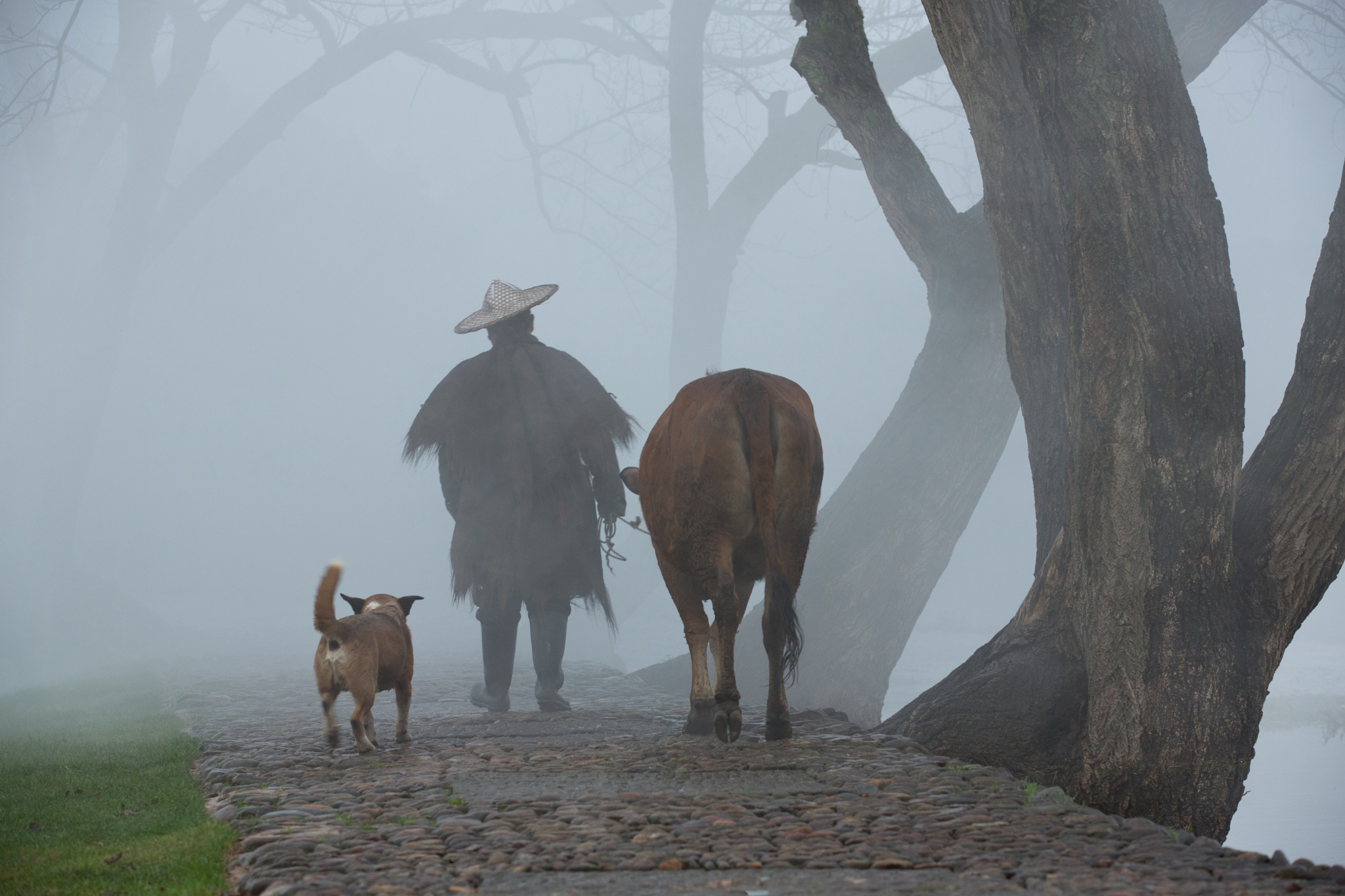 Photo in Landscape #landscape #cow #dog #rural #mists