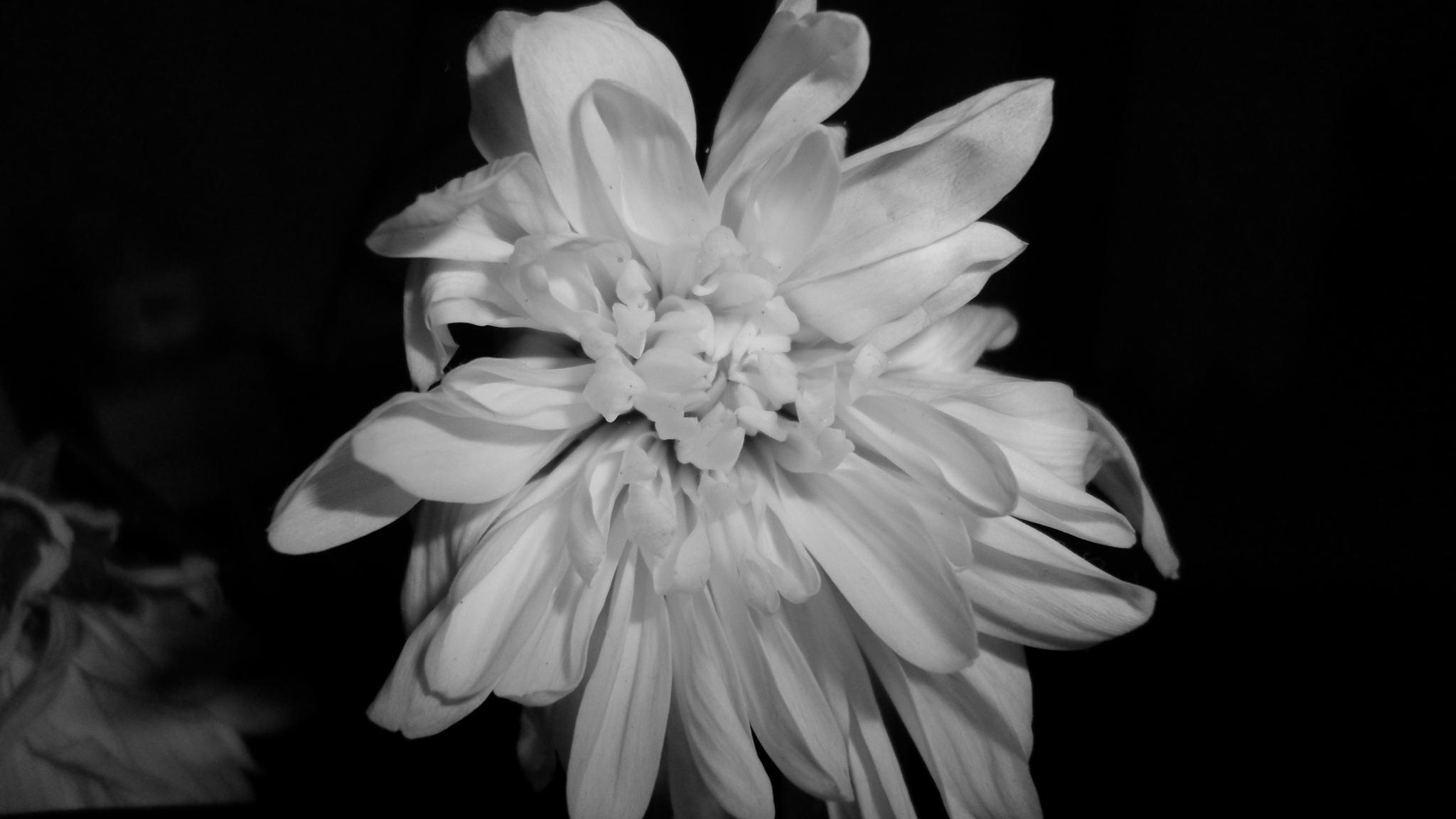 B&W Flower by Cristiana