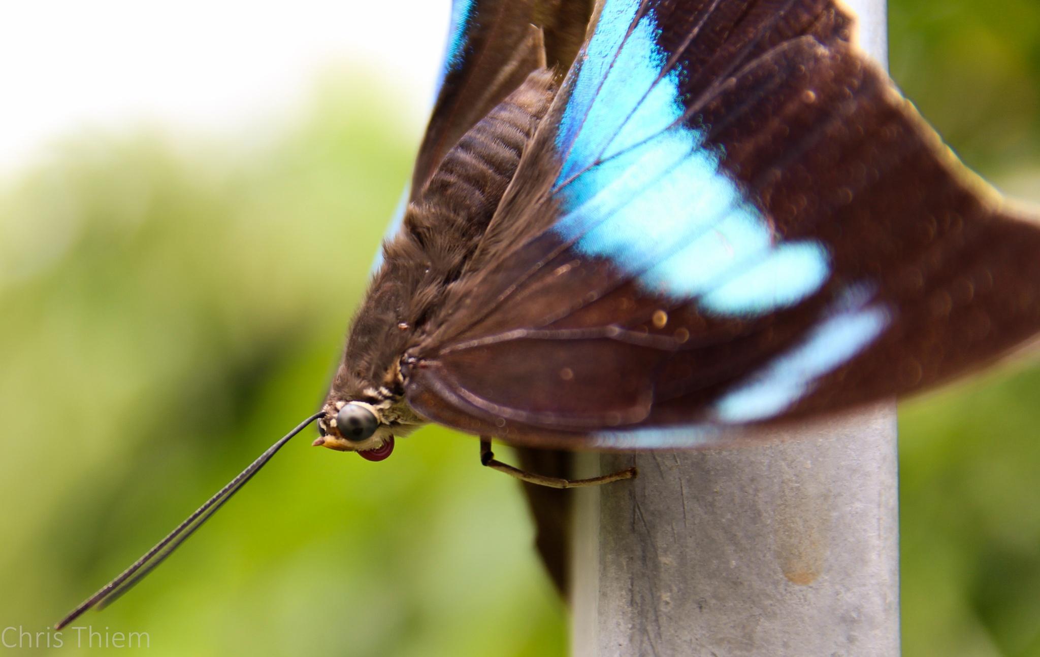 Schmetterlingsgesicht by Christin