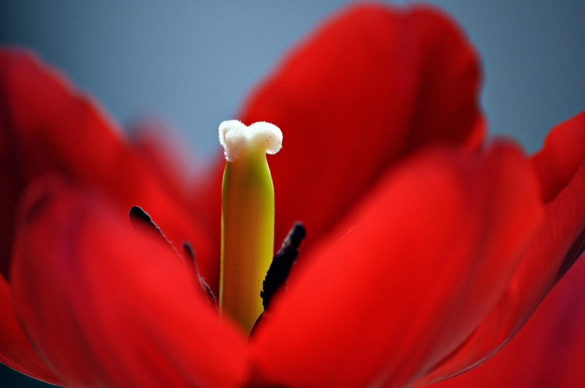 Red Macro by rubem.campos