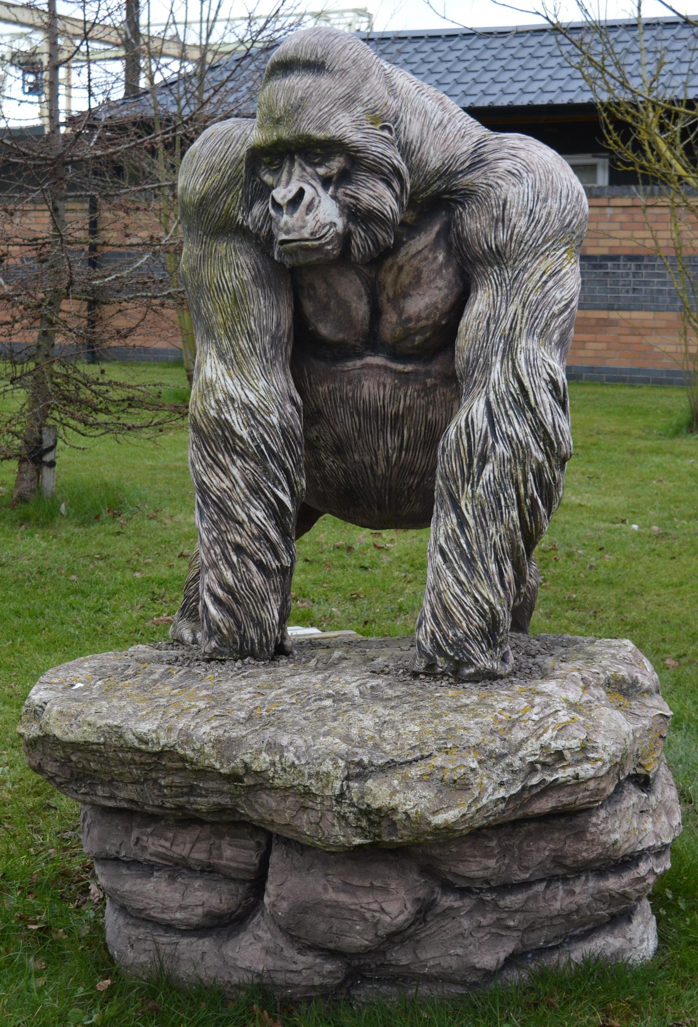 Gorilla 2 by declan delaney