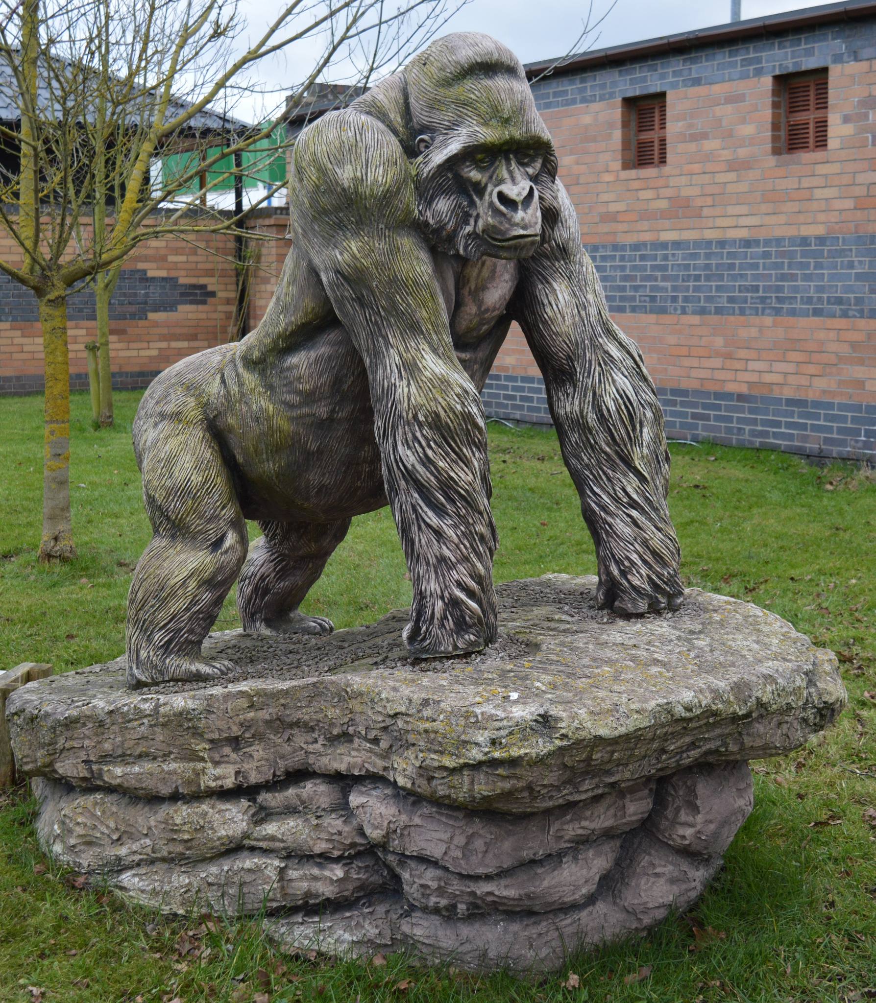 Gorilla 3 by declan delaney