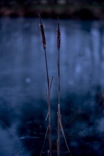 Photo in Random #landscape #reed #morning