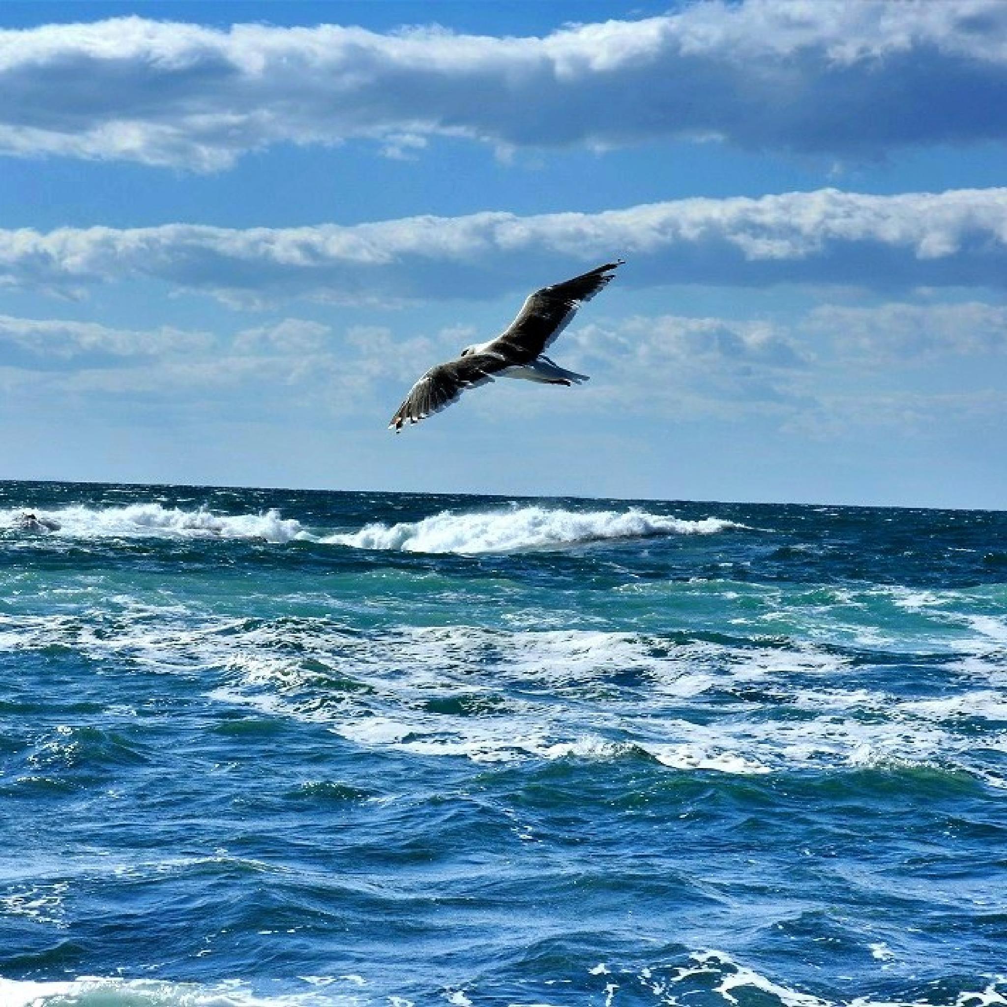 Beauty in flight. by Matthew W Thomsen