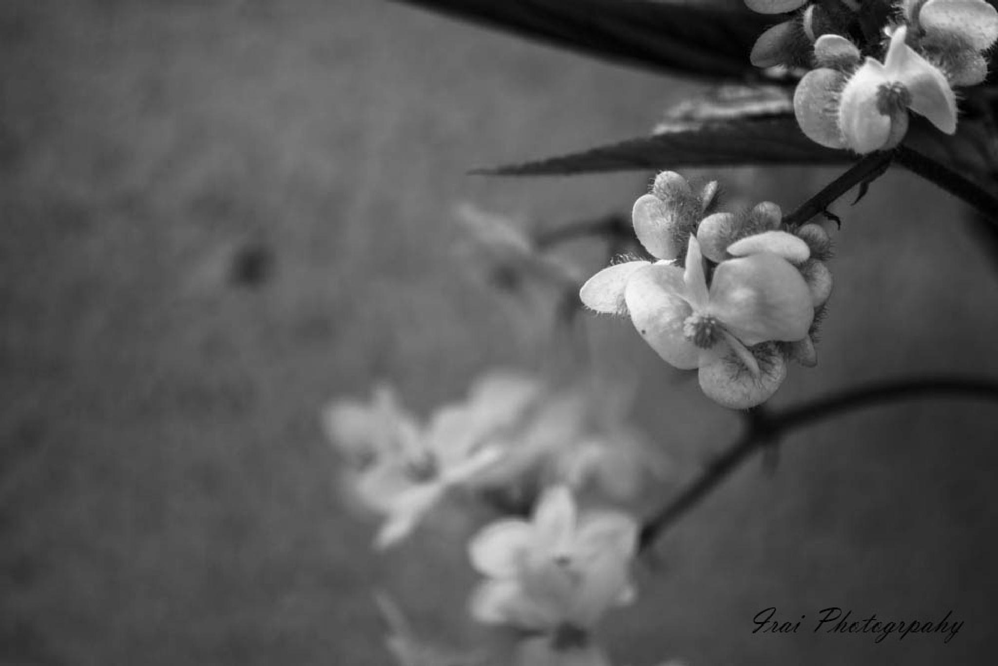 My little flower by Irai