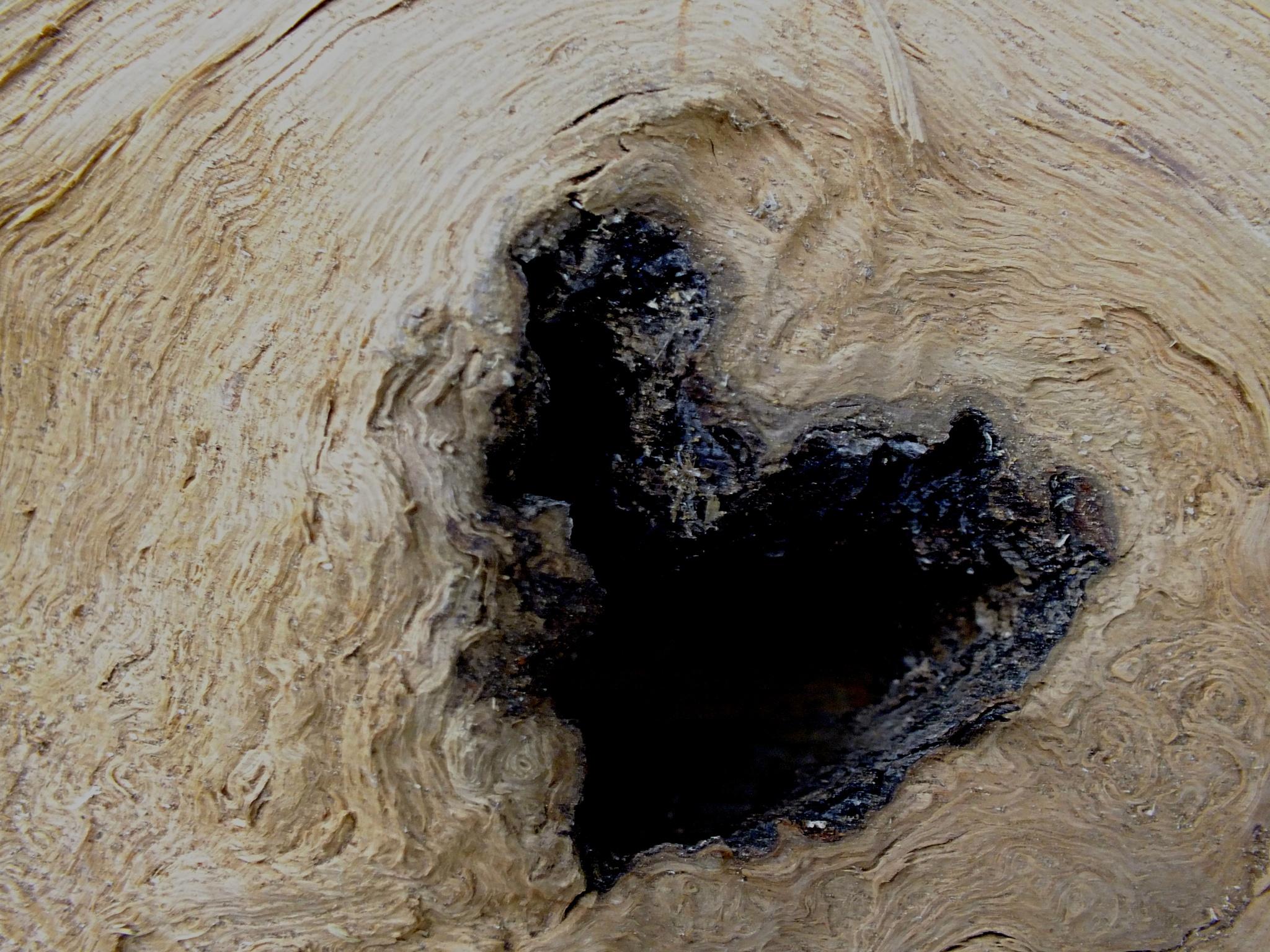 wooden heart by Jill Bartlett