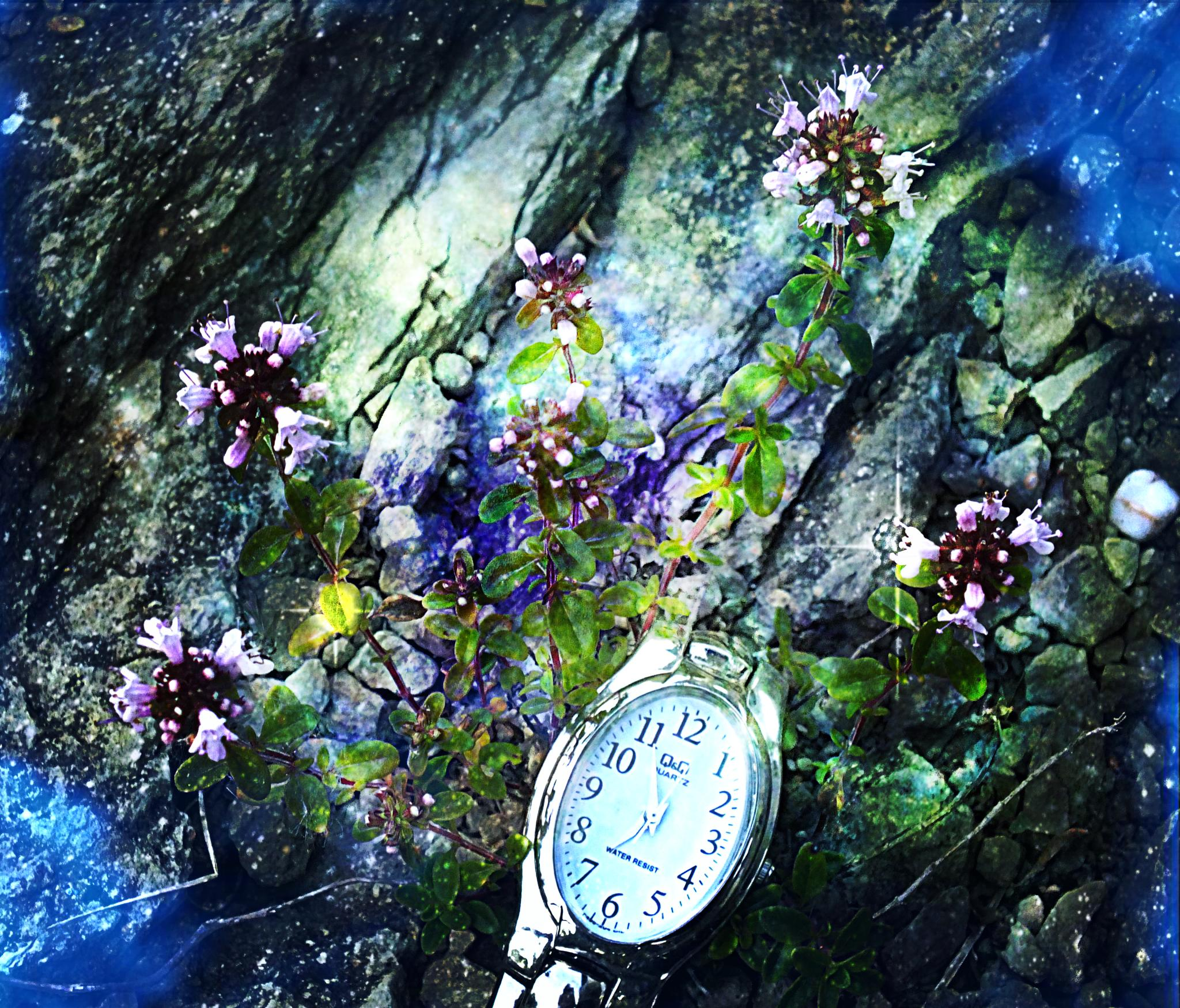 Photo in Random #space #time #thyme