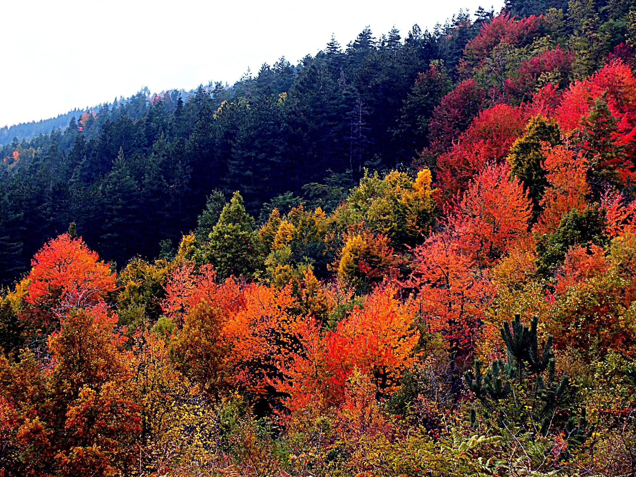 Mountain Autumn by Jill Bartlett