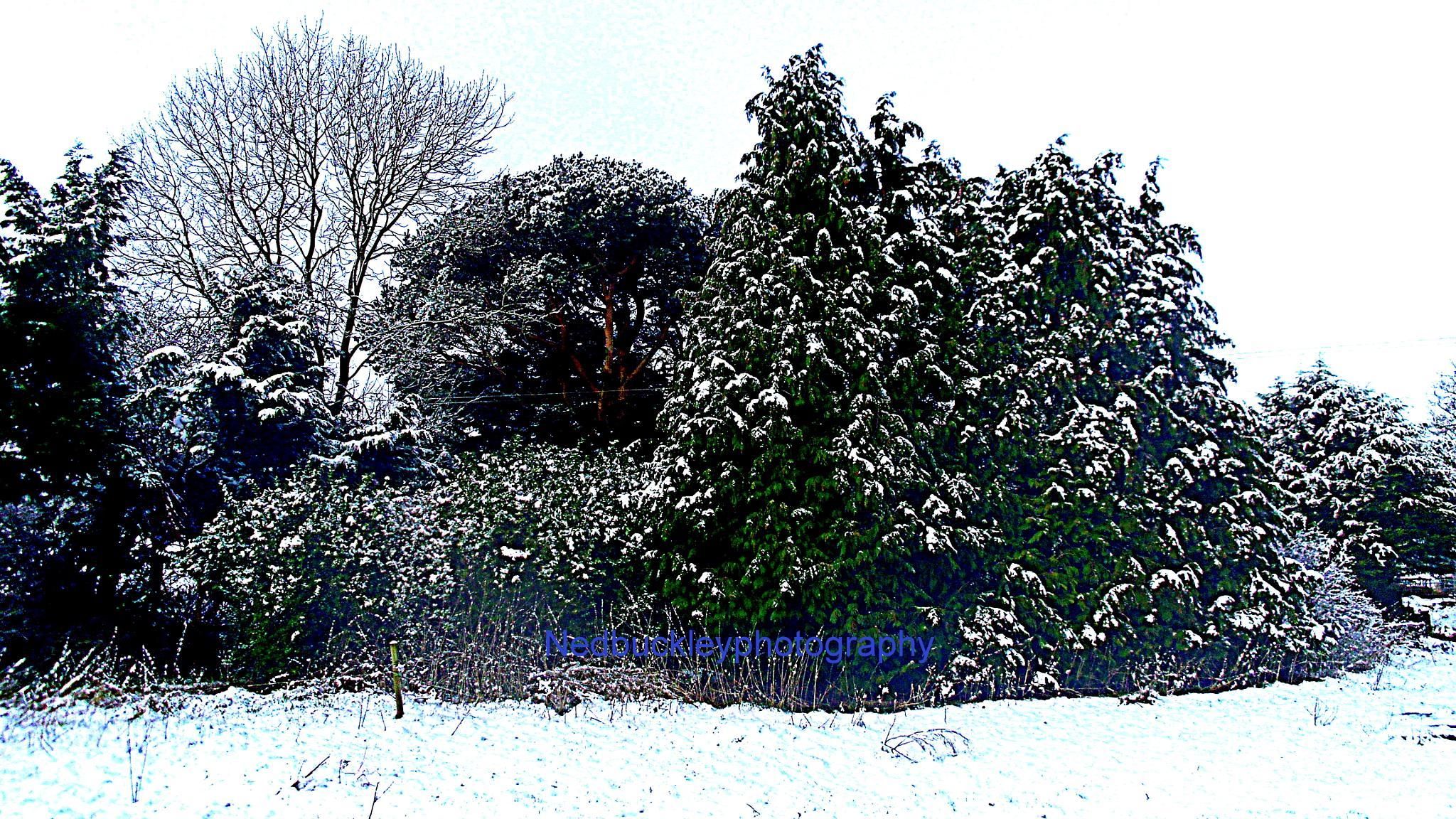 Snow Scene  by Nedbuckleyphotography