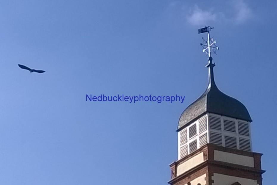 freebird by Nedbuckleyphotography