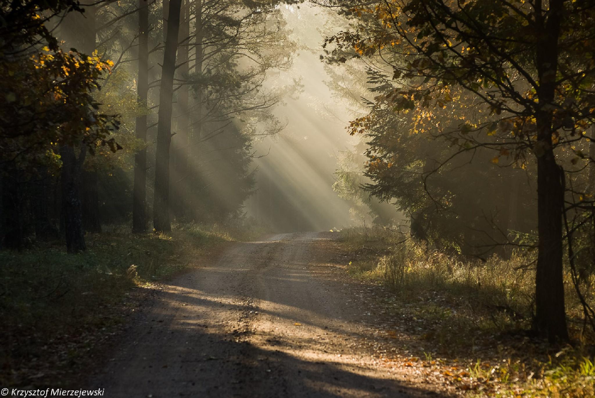Forest light by Krzysztof Mierzejewski