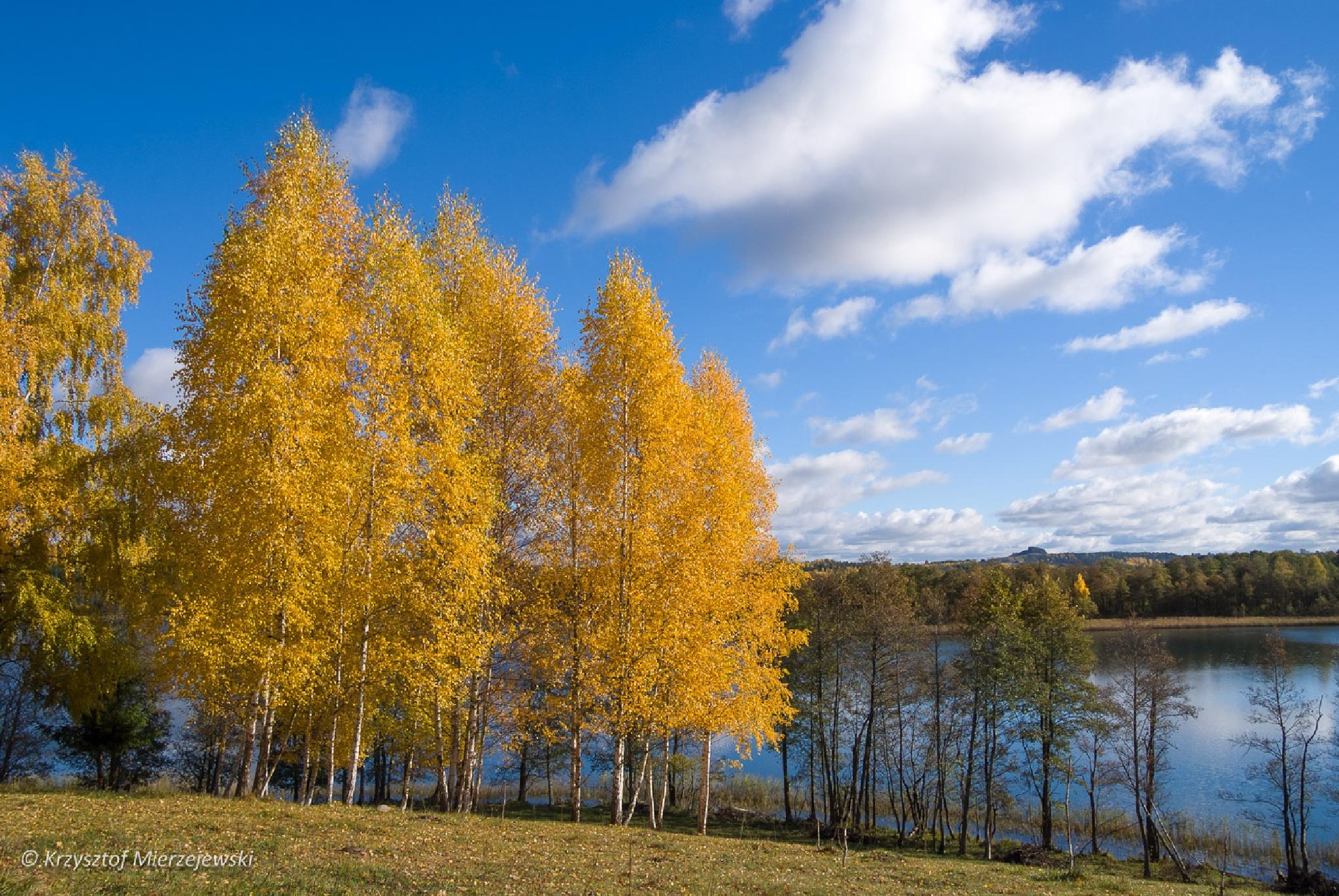 Color of autumn by Krzysztof Mierzejewski