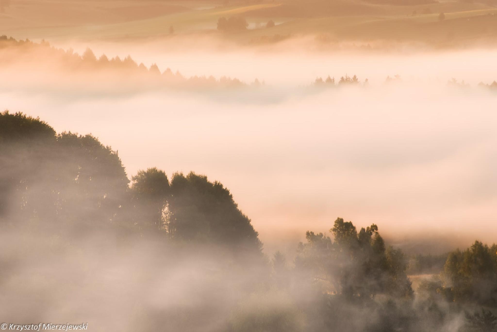 Misty morning by Krzysztof Mierzejewski