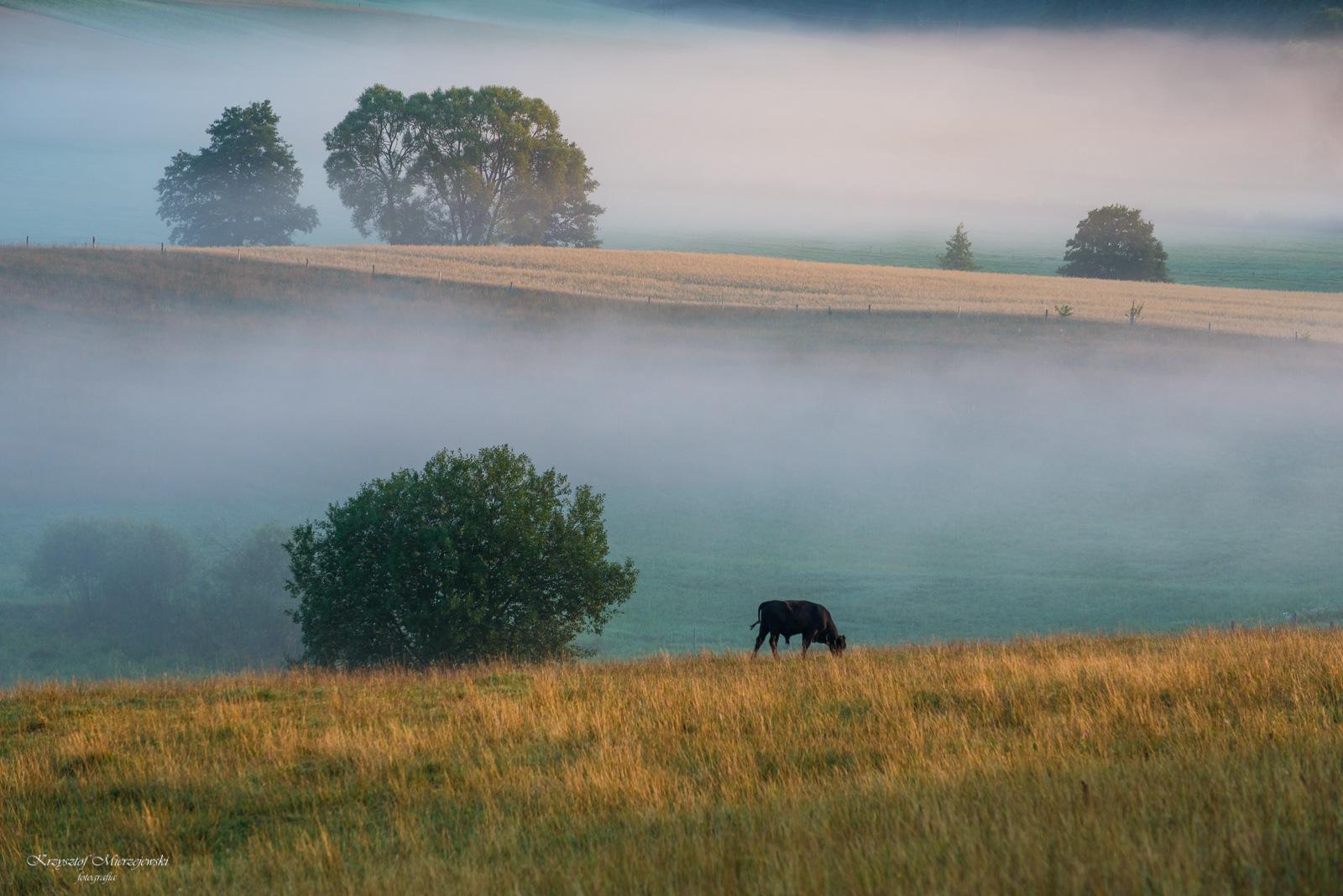 Foggy morning by Krzysztof Mierzejewski