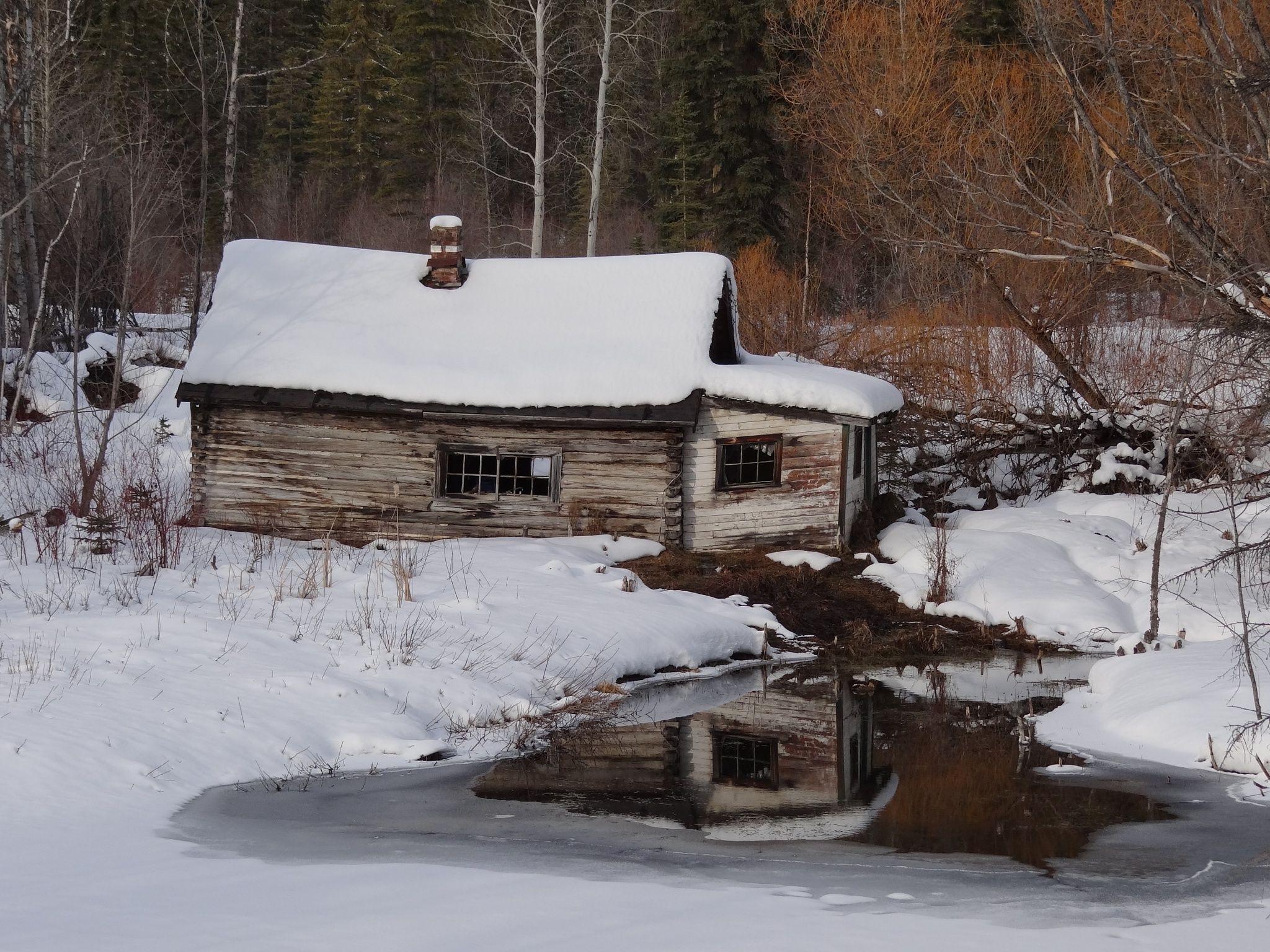 Old Cabin by tricialpat