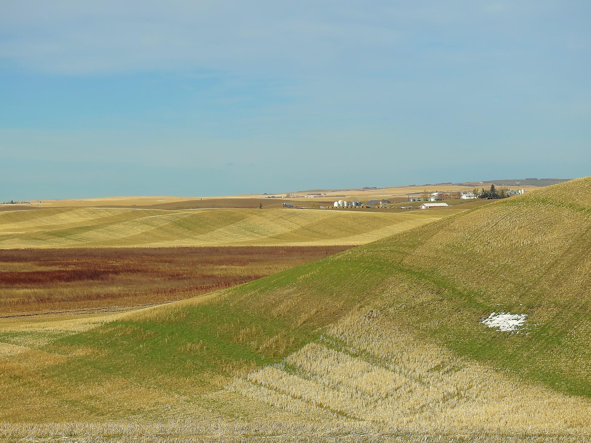 Plaid Farming by tricialpat