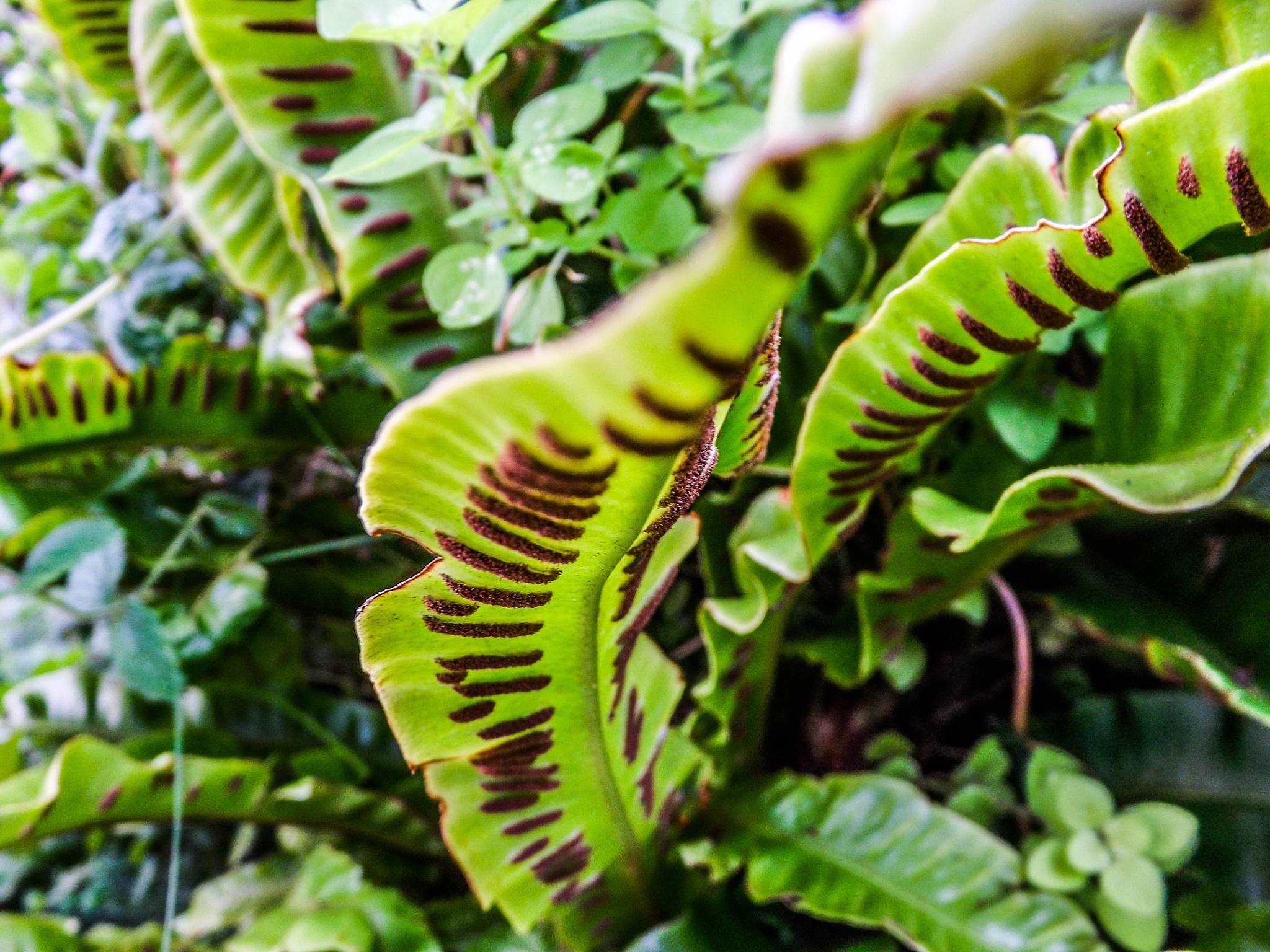 under the leaf by Gemma Sizer