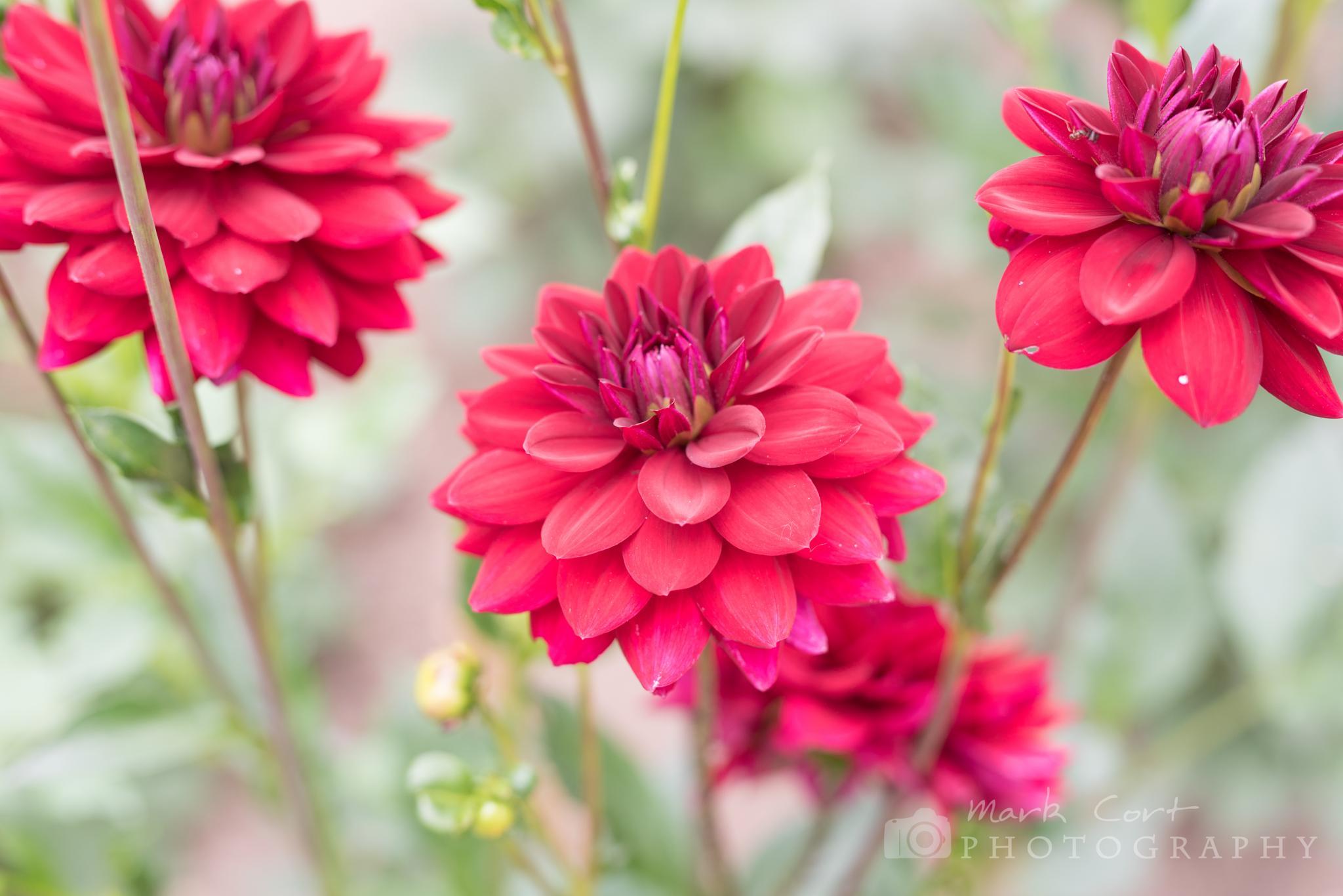 Flowers in Norfolk by Mark Cort
