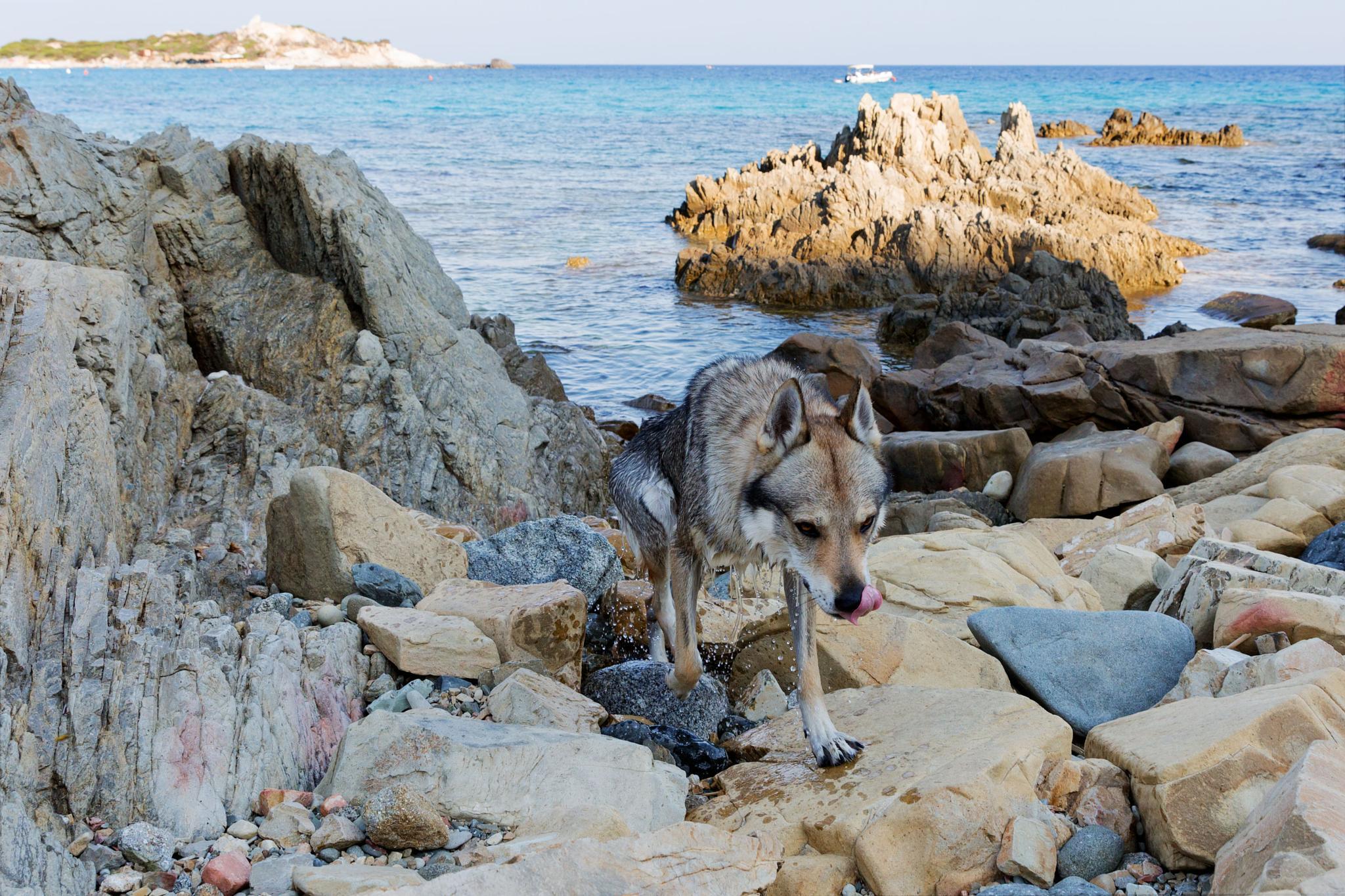On the Rocks by Francesco Cinque