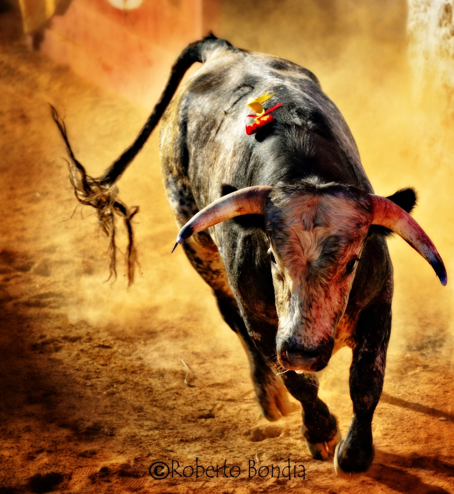 bull by Roberto Bondia