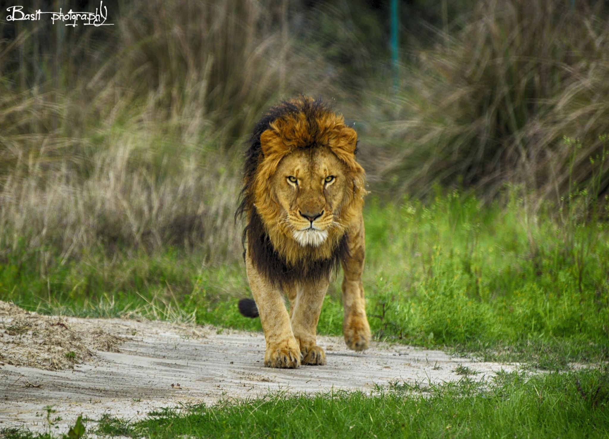 wild life by basitali