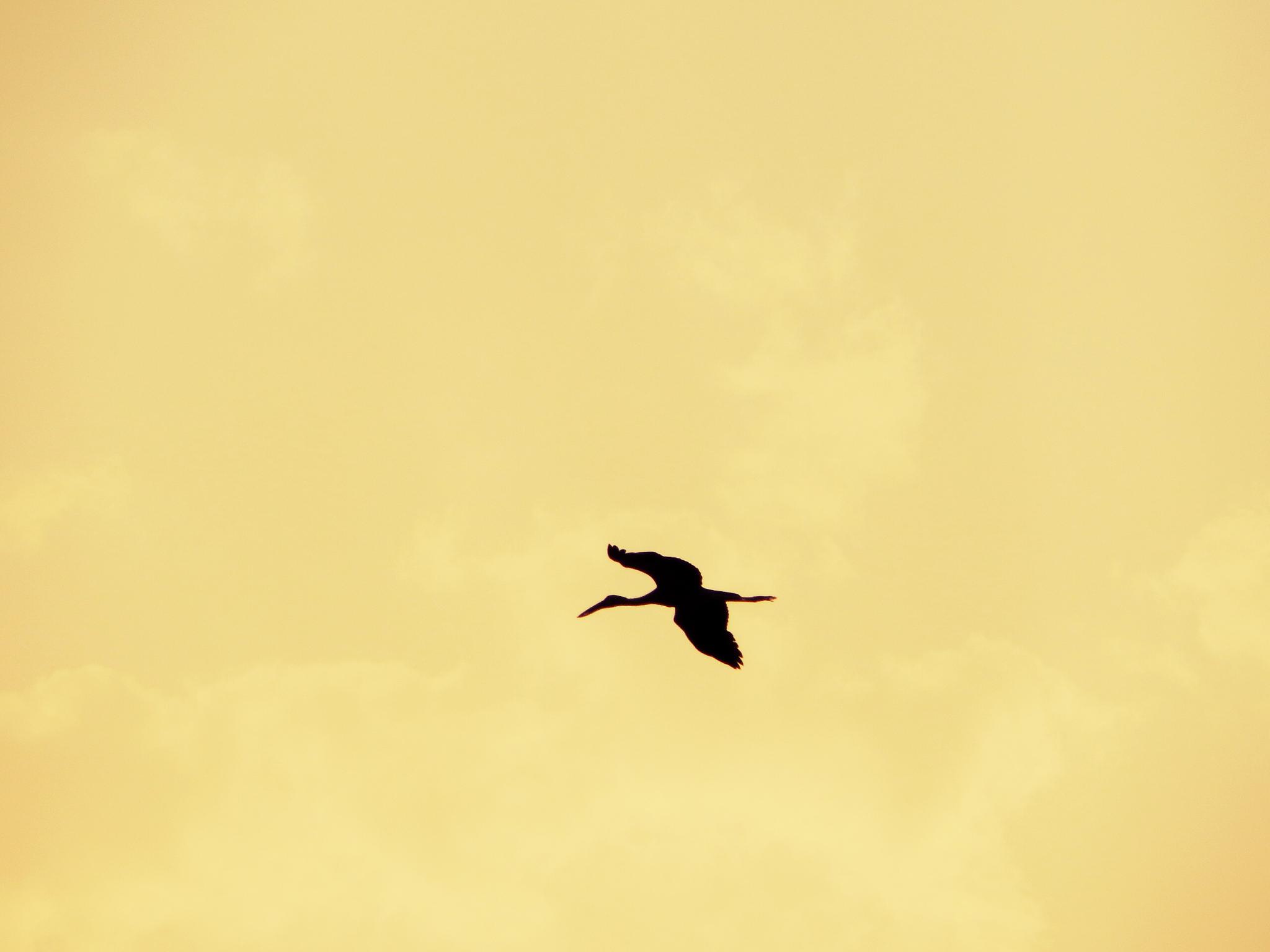 Freedom... by Debraj Das