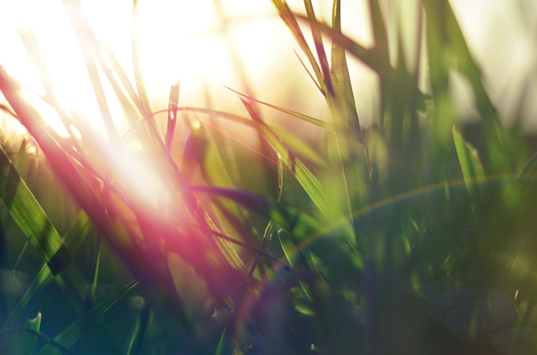 grass sun flare by Đorđe Novakov