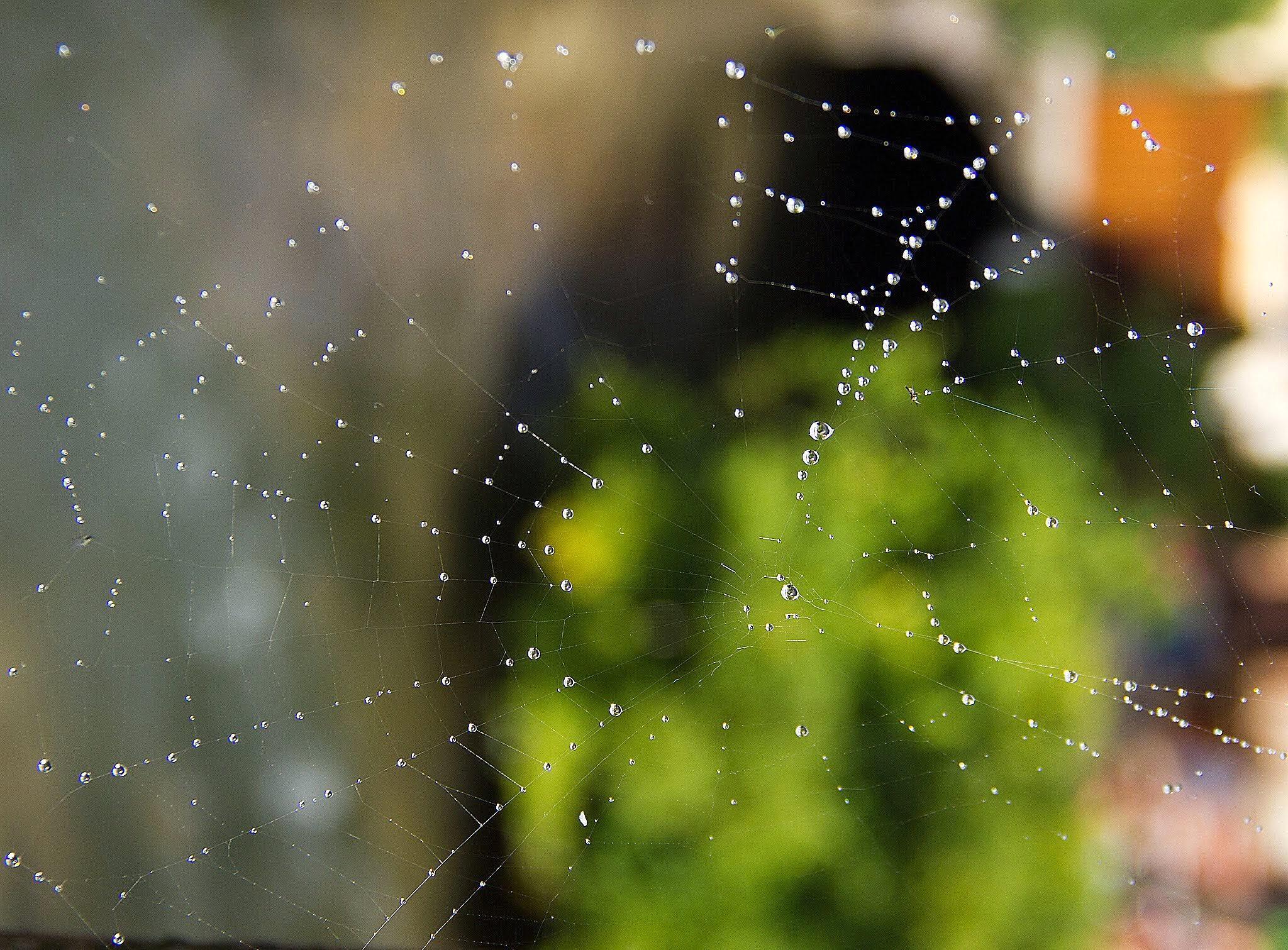 The wet web by Koshka10