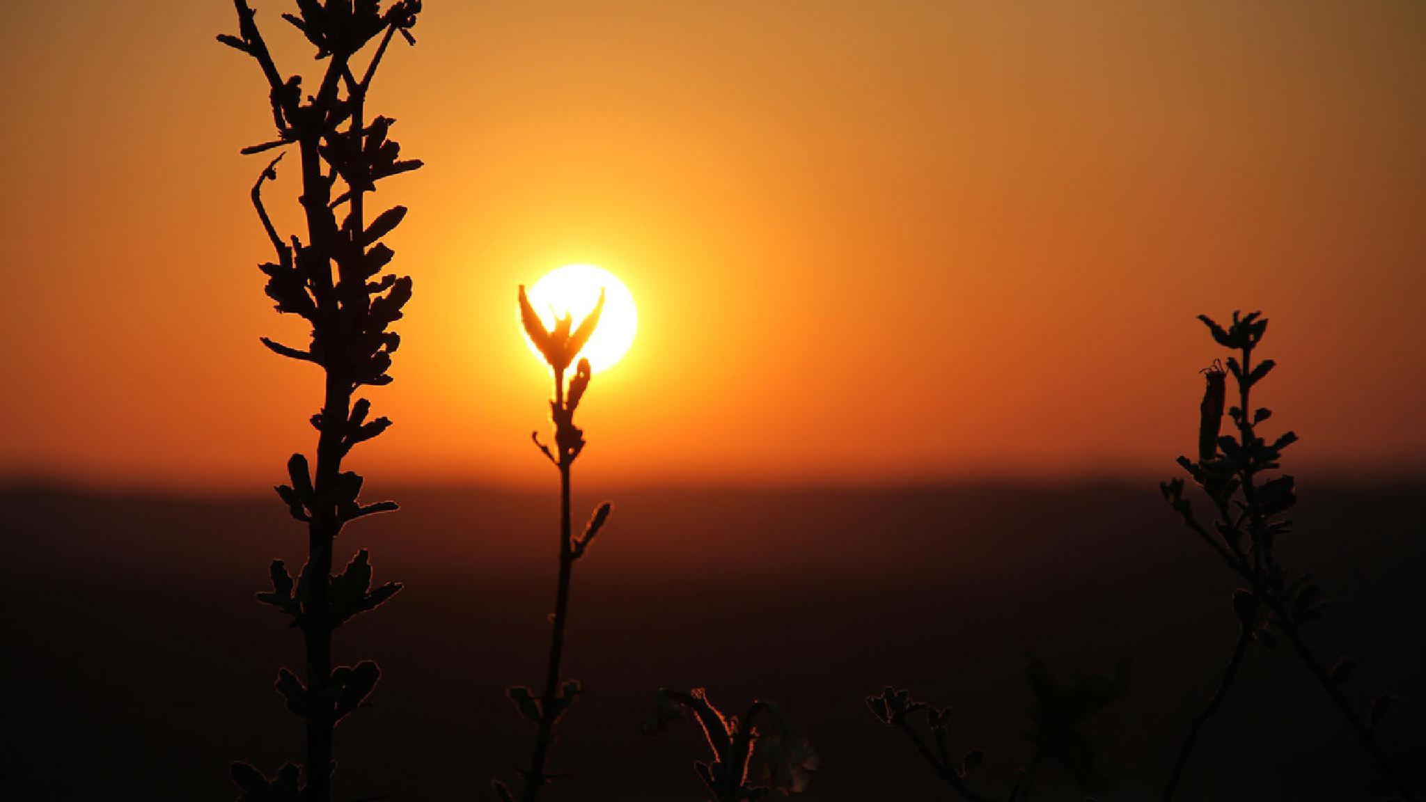Bushveld Sunset by Nel van Greunen