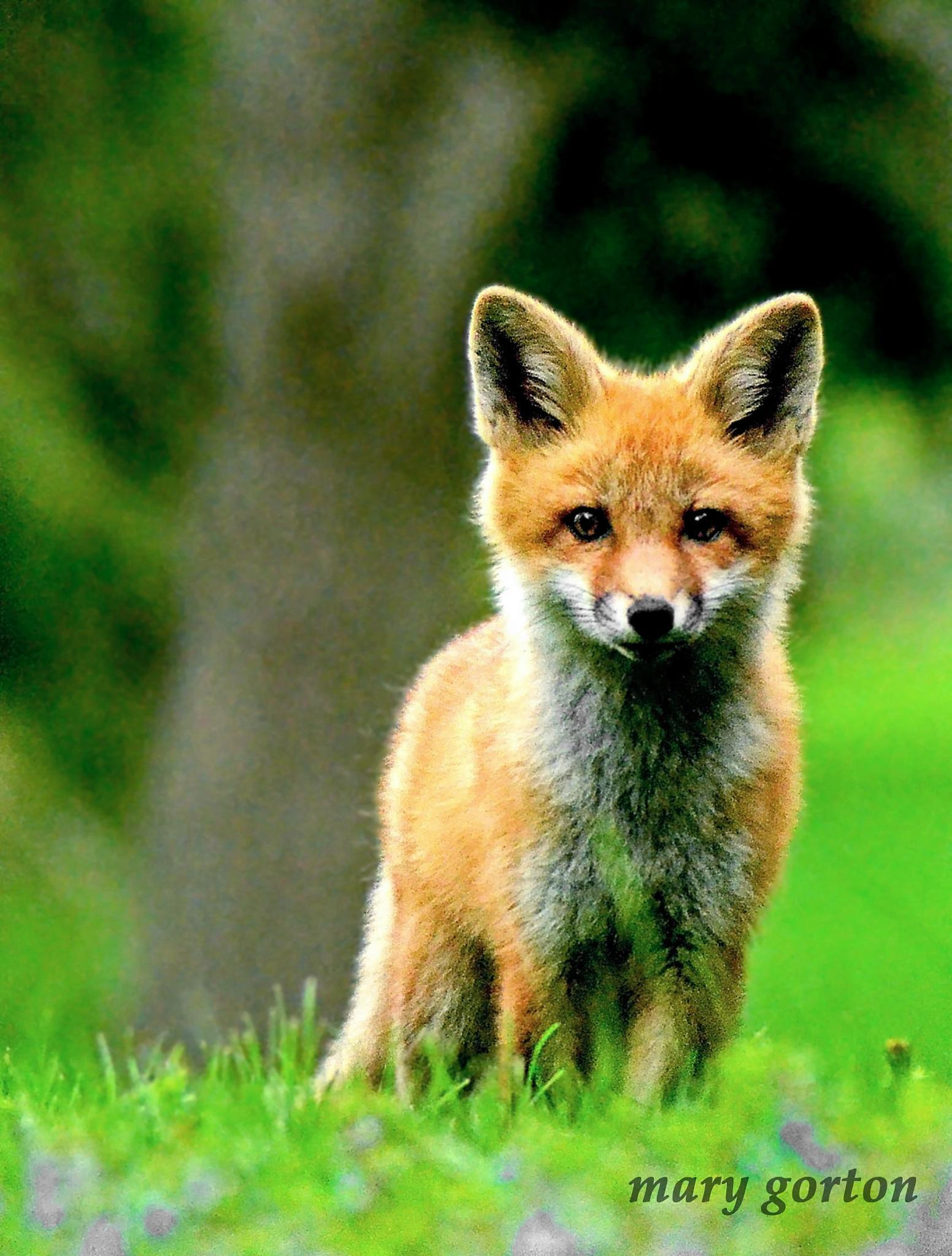 What a Fox by Mary Jean Gorton