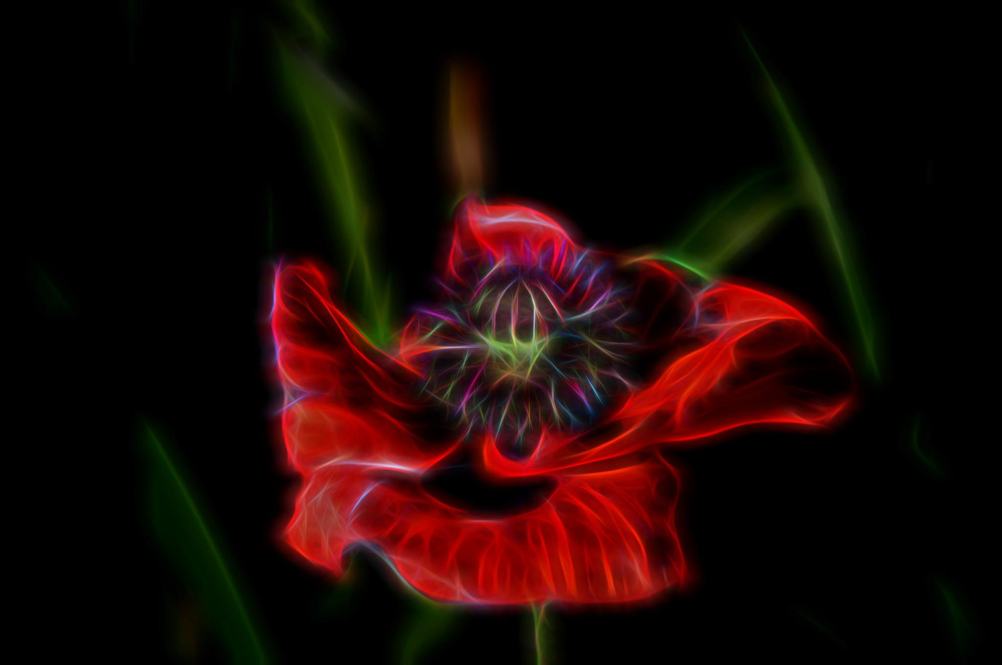 Red Poppy Digital Art by twopointeightphotography