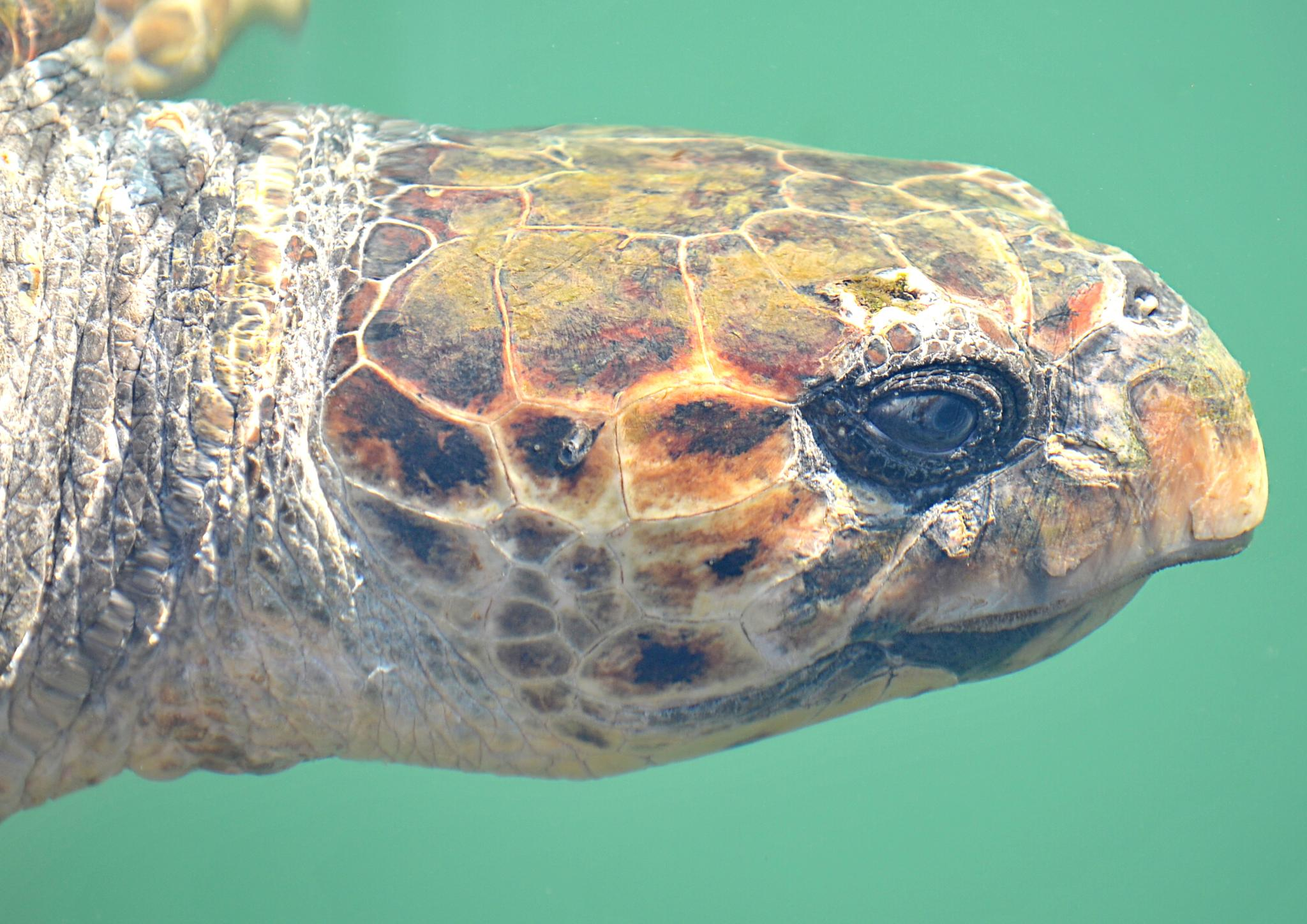 Eye of the sea turtle by twopointeightphotography
