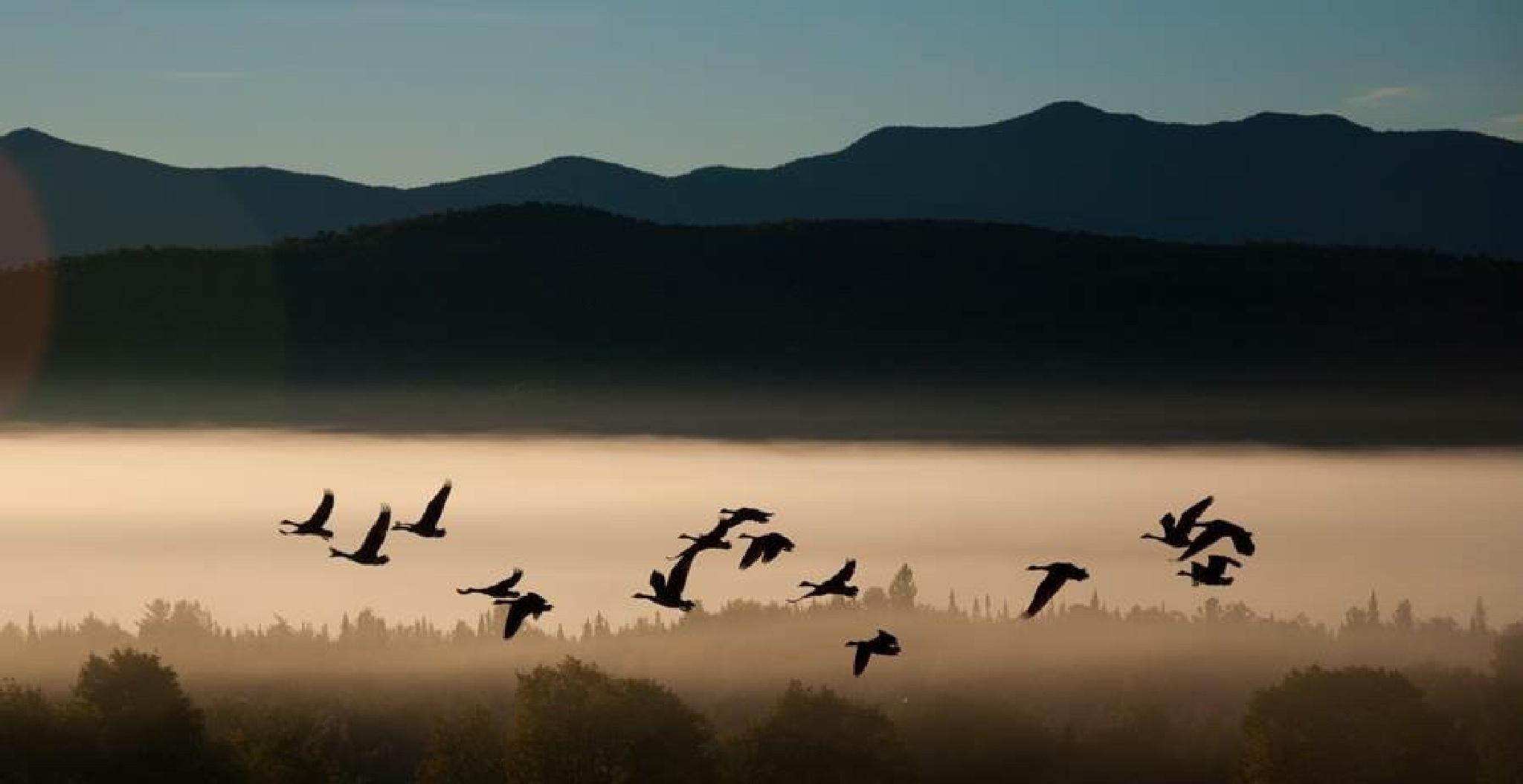 Morning Fly in ! by ADKPhotoTaker