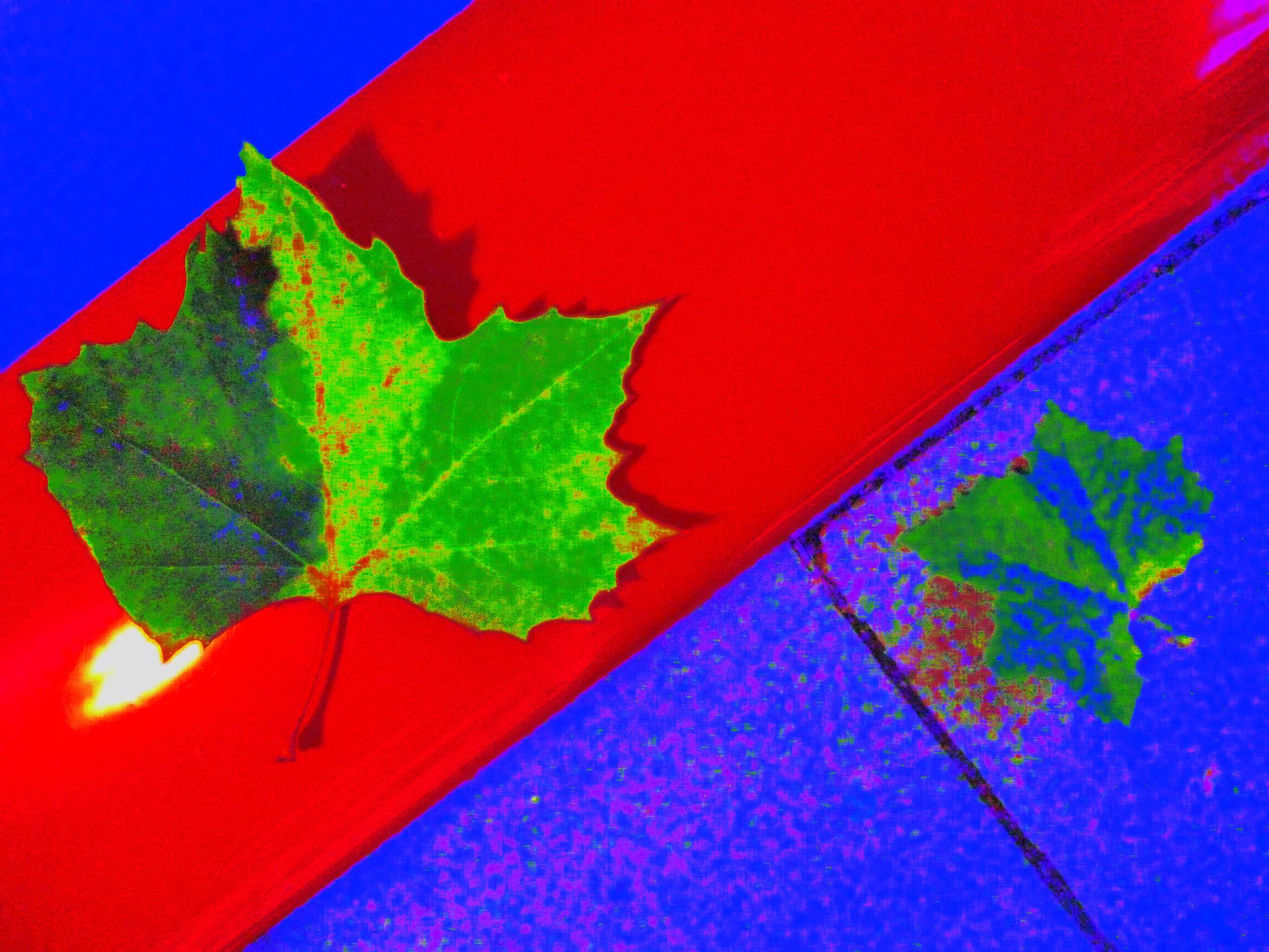 ghost of a leaf by david lewis