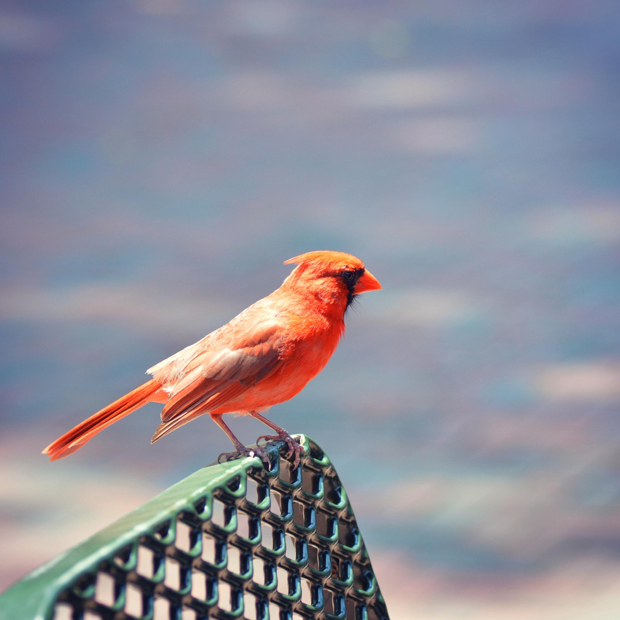 Perched Pretty by LittleHummingBirdPhotography