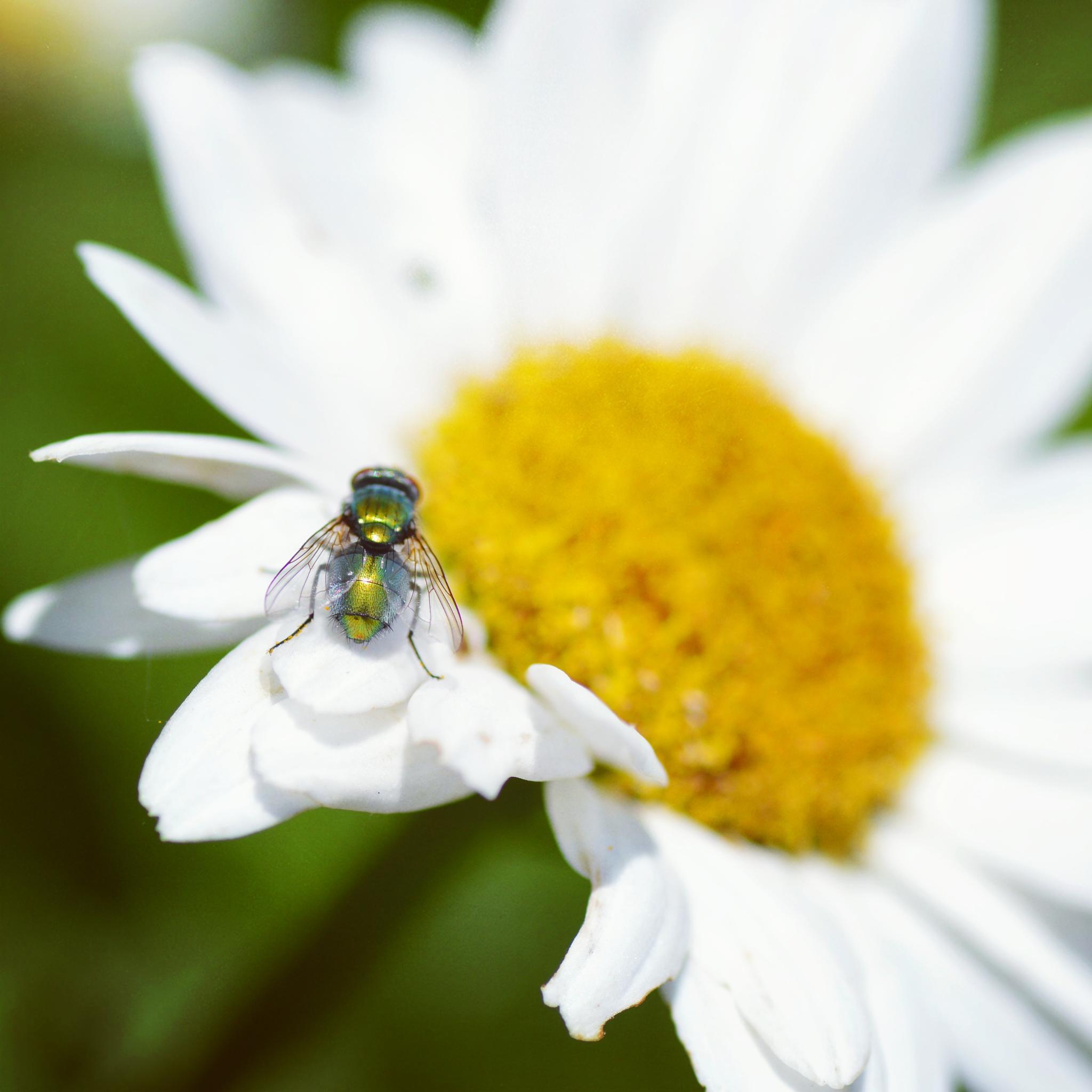 """Shoo Fly"" by LittleHummingBirdPhotography"