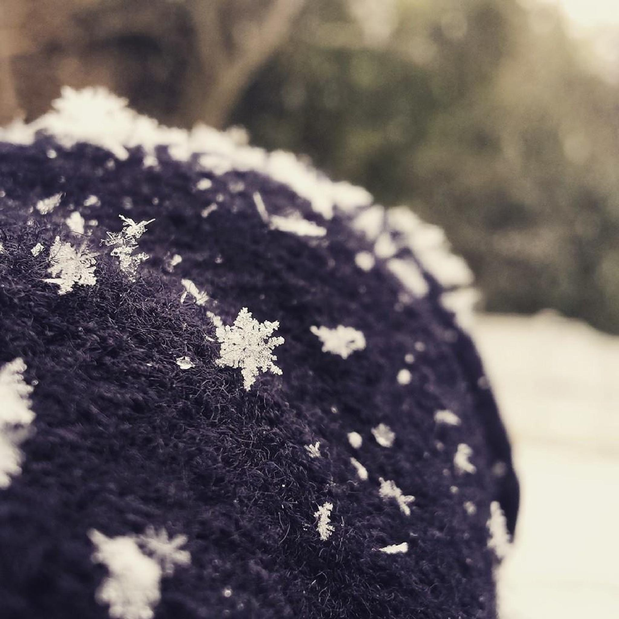 """Snowflake"" by LittleHummingBirdPhotography"
