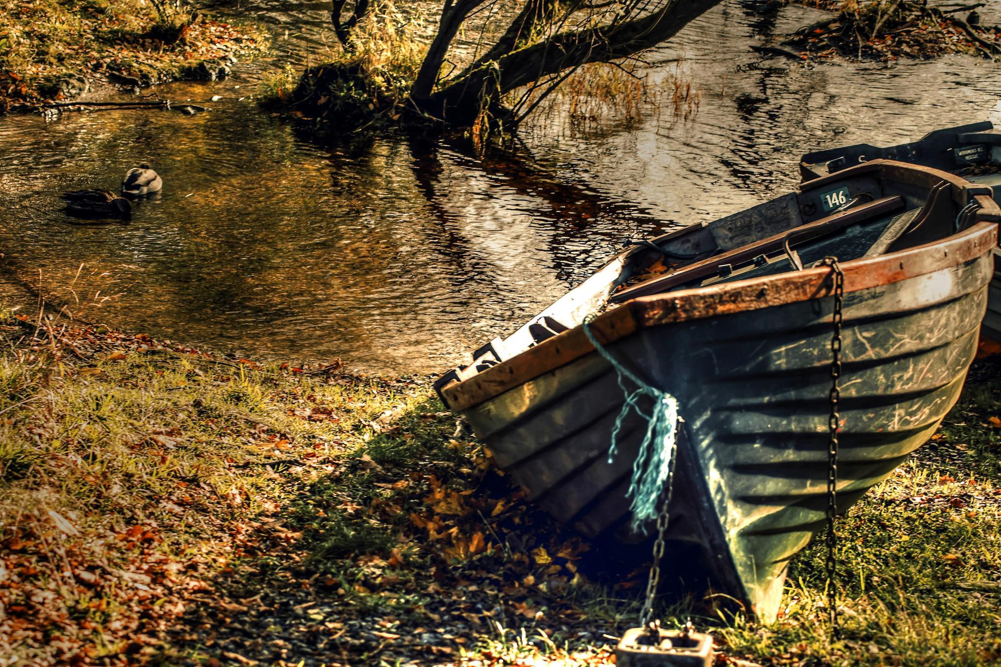 Boat ashore by Ibolya Szebeni