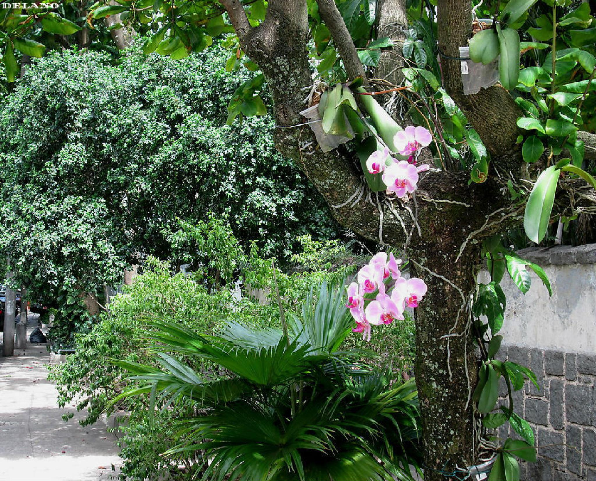 orchids hanging on a tree... Copacabana Rio de Janeiro by dell.campelo