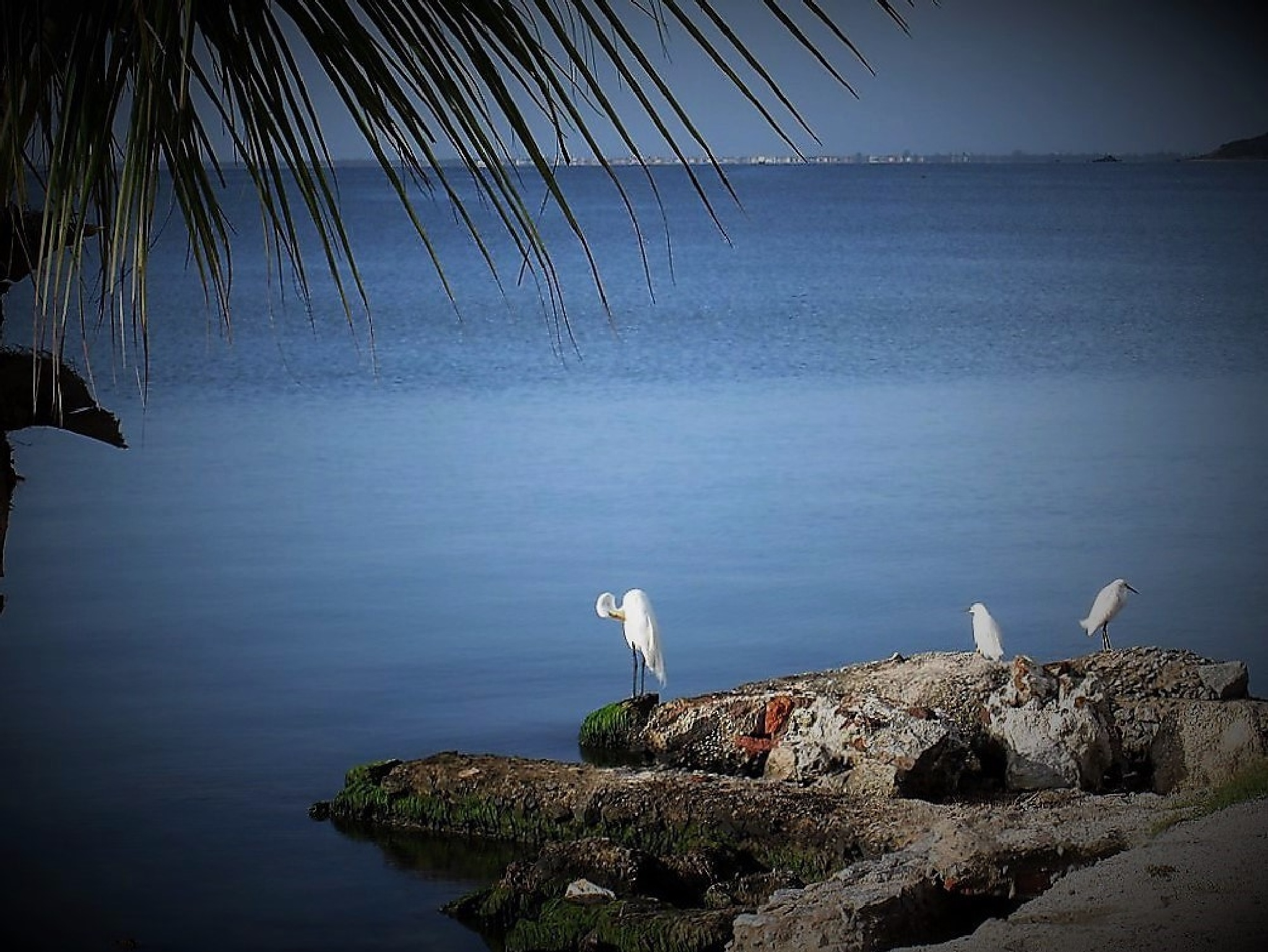 herons....resting....relaxed... by dell.campelo