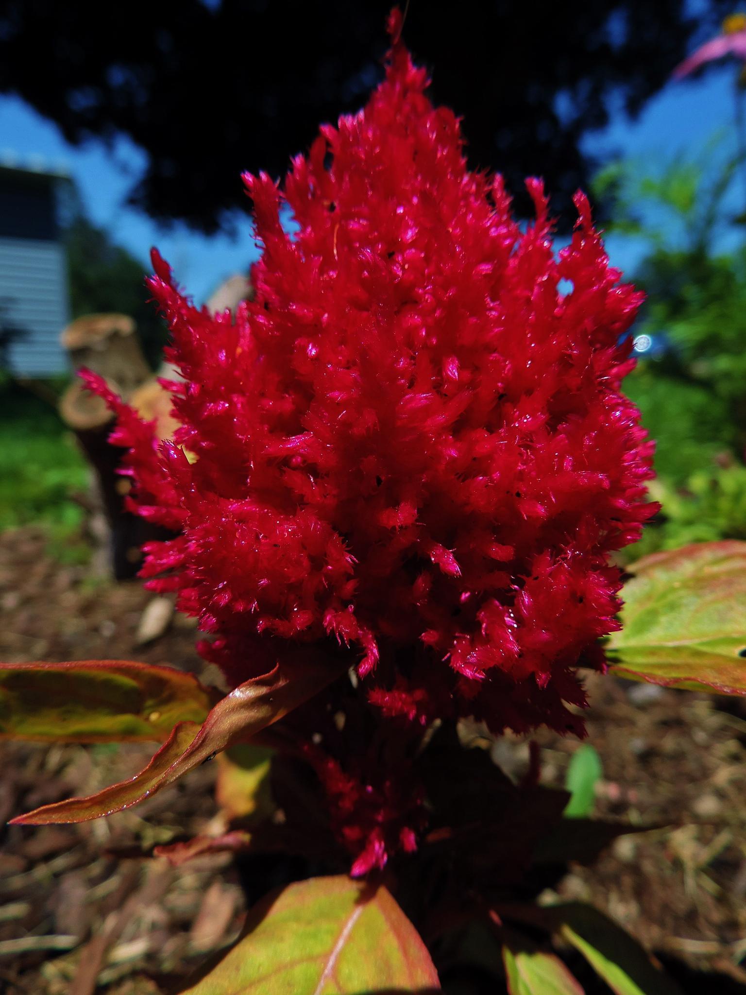 Pretties in Red by Darla Allburn