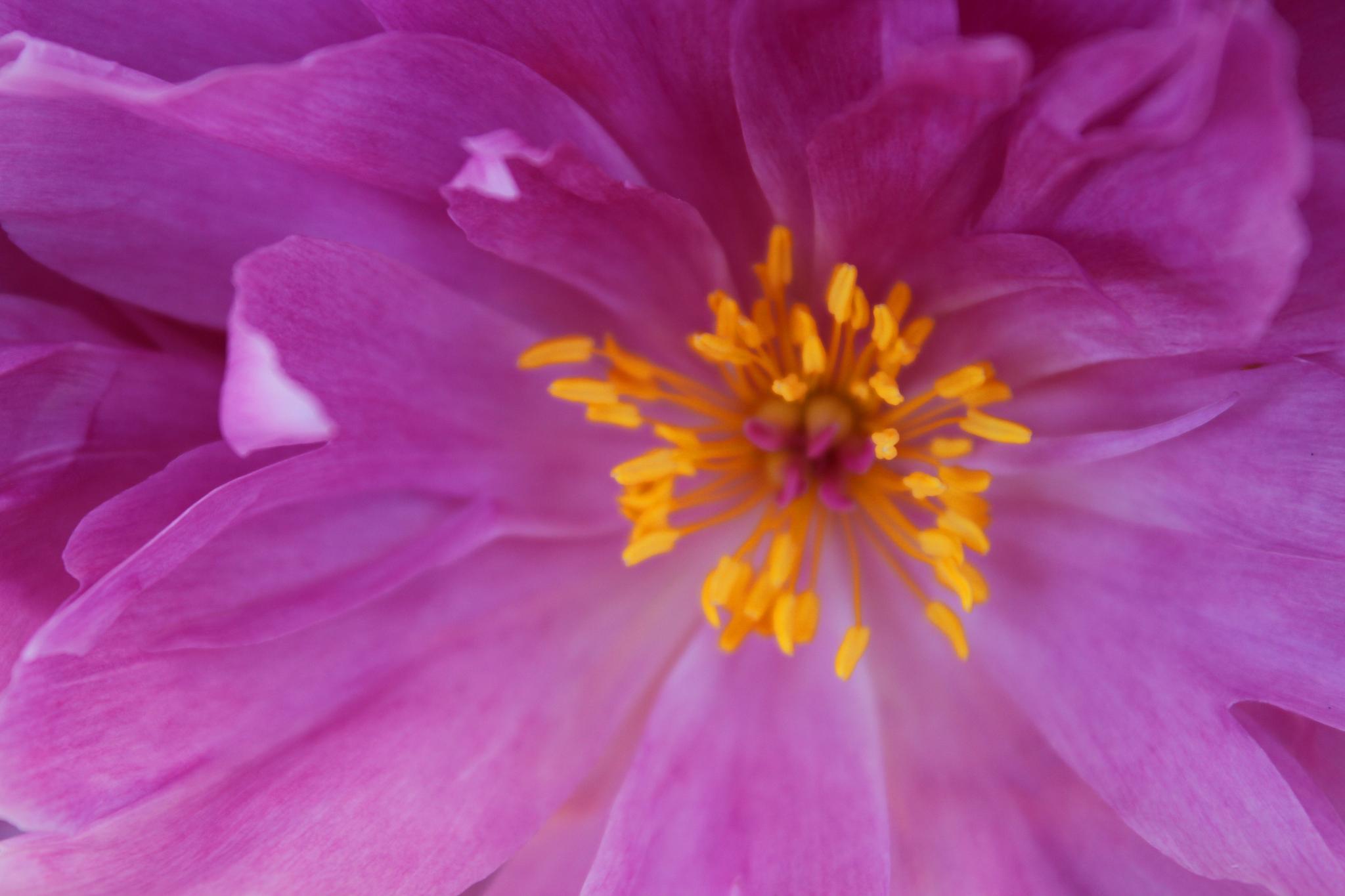 flower by debbie2506