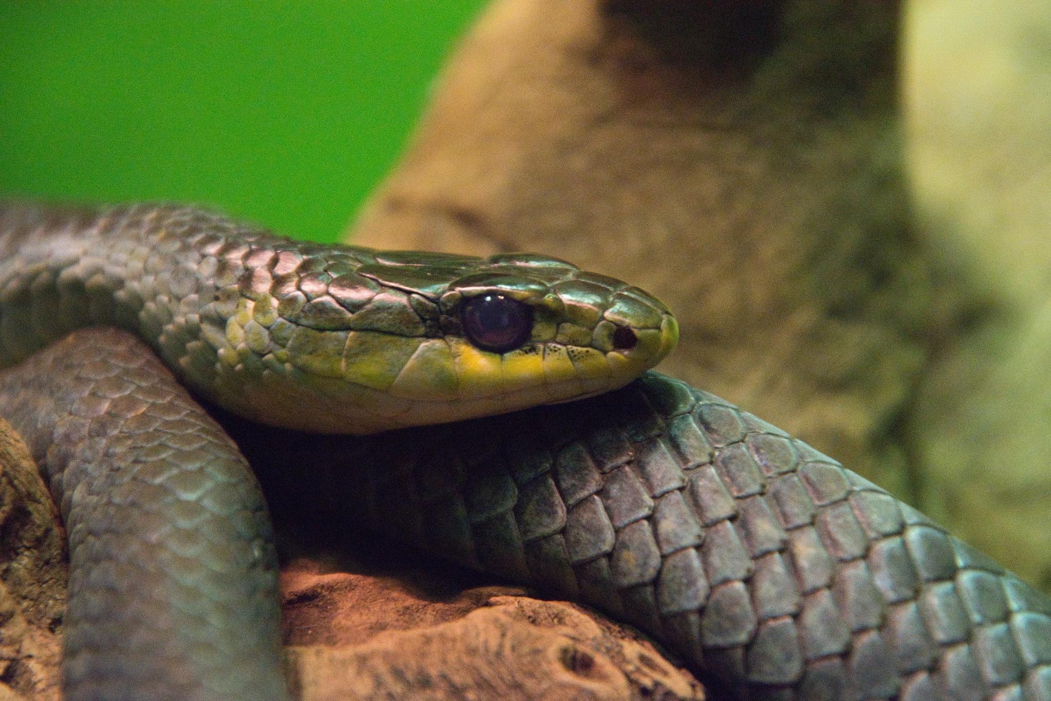 Green Snake by Kim McGlinchey