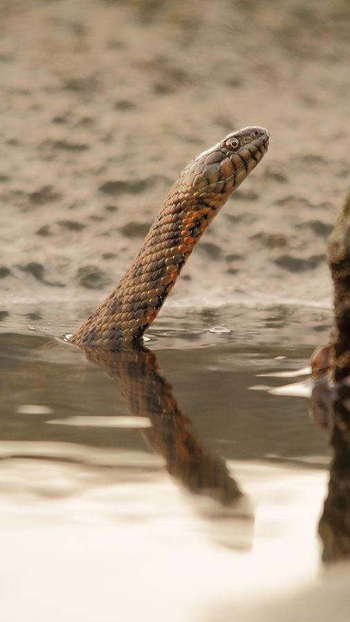 Serpent by rys.roman